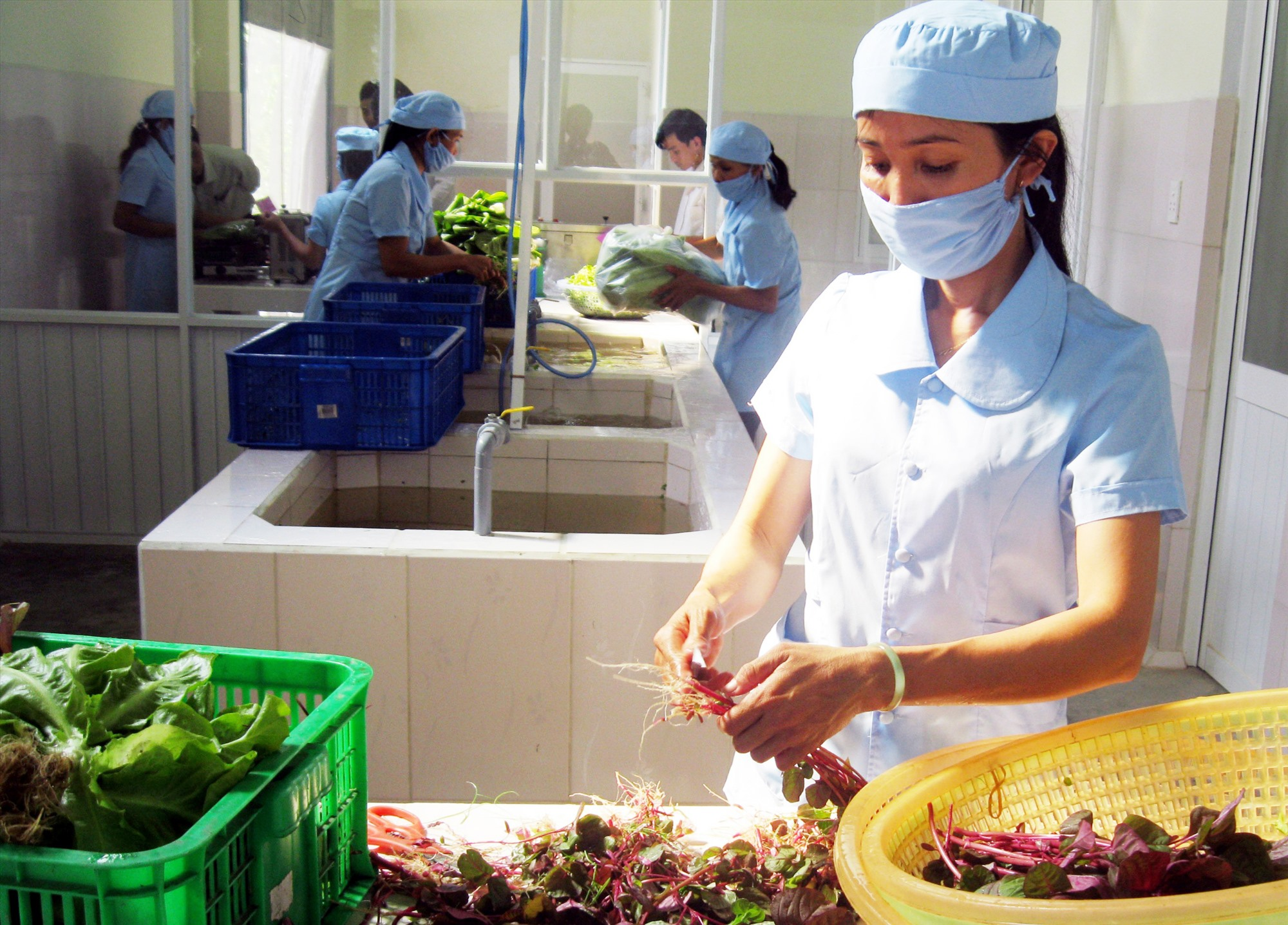 Hơn 2 năm nay, việc tiêu thụ rau quả sản xuất theo chuỗi của HTX Nông nghiệp sạch Mỹ Hưng gặp rất nhiều khó khăn, buộc đơn vị phải đóng cửa nhiều quầy hàng cung ứng sản phẩm.