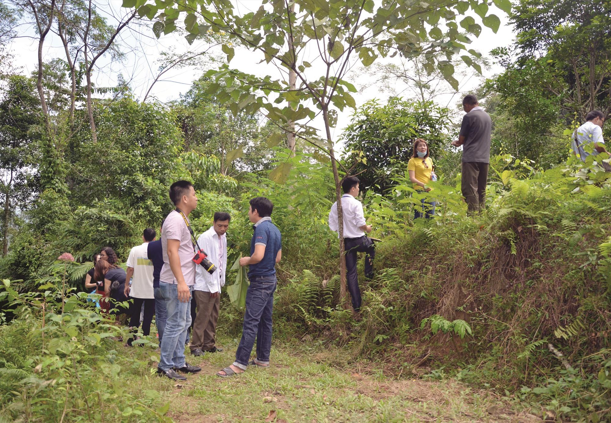 Thực hiện chương trình REDD+ sẽ tạo thêm sinh kế từ rừng cho người dân địa phương. TRONG ẢNH: Các chuyên gia khảo sát mô hình REDD+ tại tỉnh Bắc Kạn. Ảnh: T.H