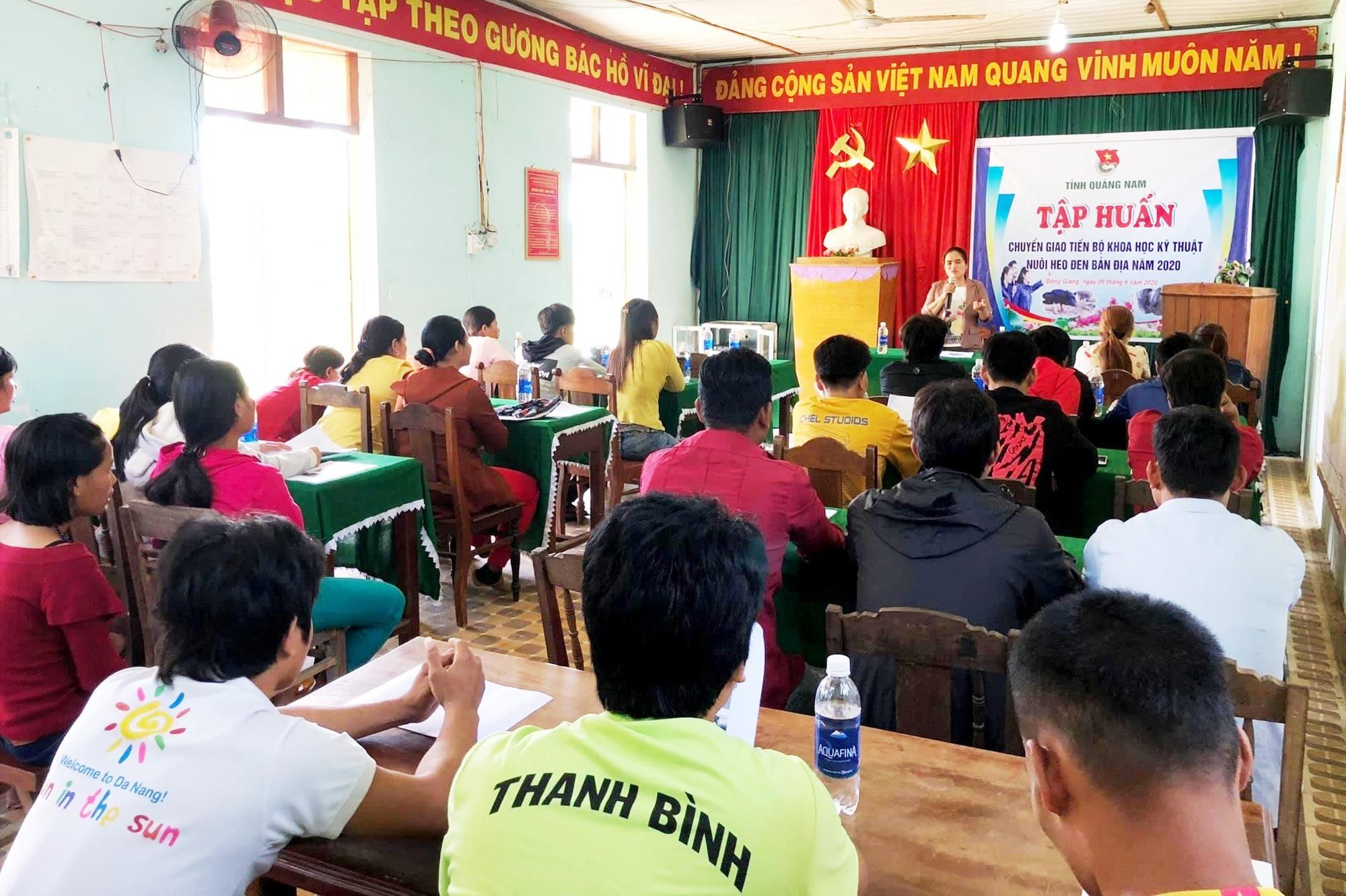 tập huấn chuyển giao kỹ thuật nuôi heo đen bản địa cho thanh niên Đông Giang