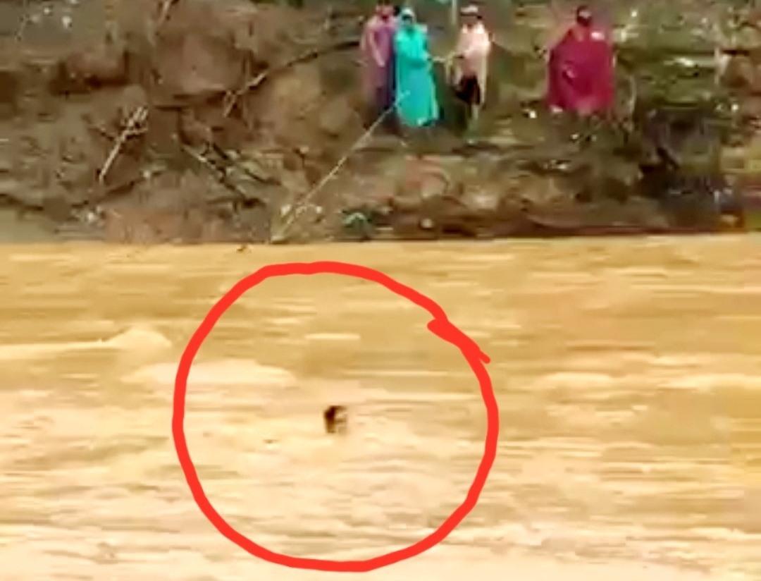 Một người dân trong lúc đu dây đã bị rơi xuống sông. Ảnh cắt từ clip