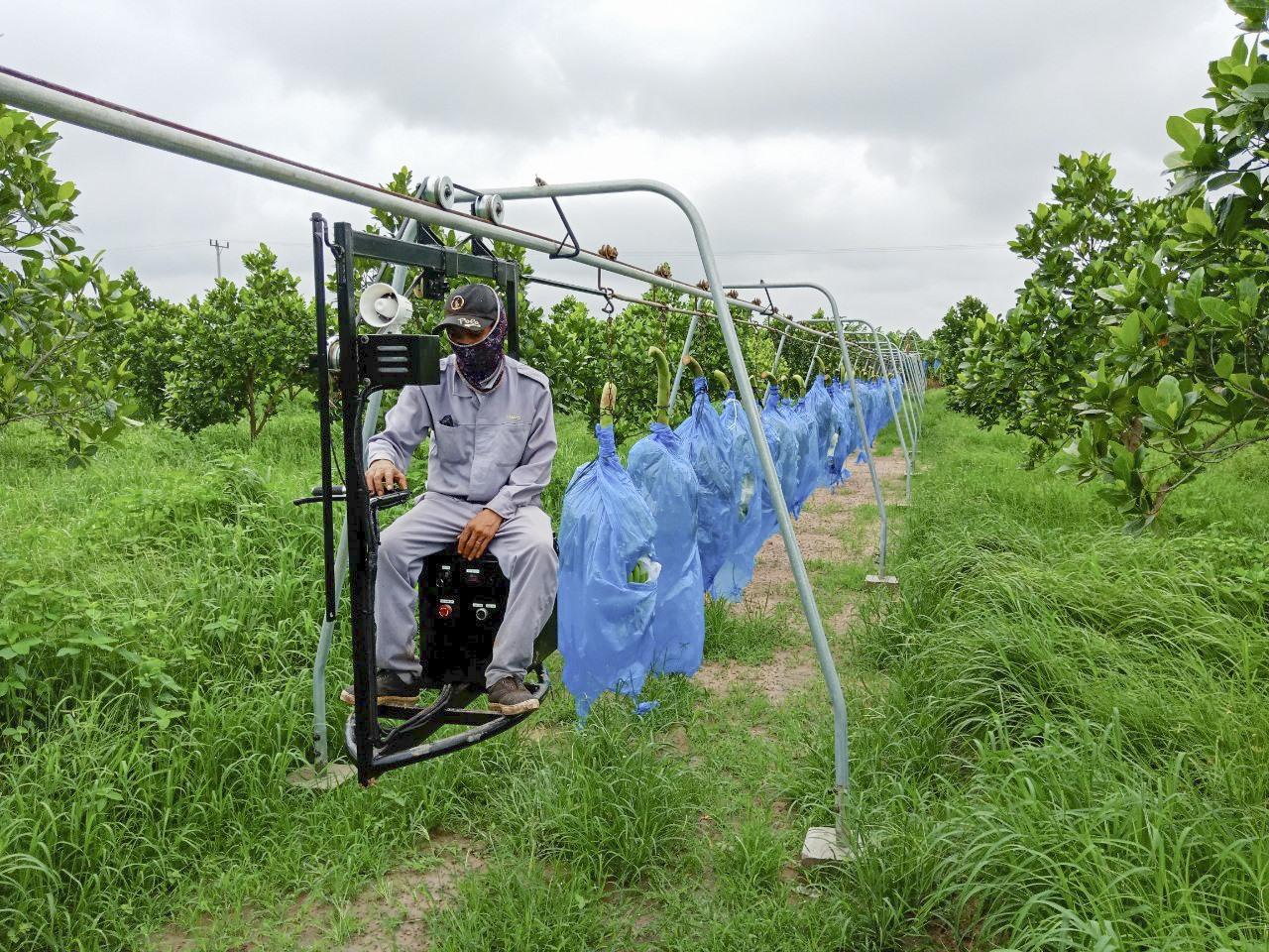 Hệ thống ròng rọc thu hoạch chuối.