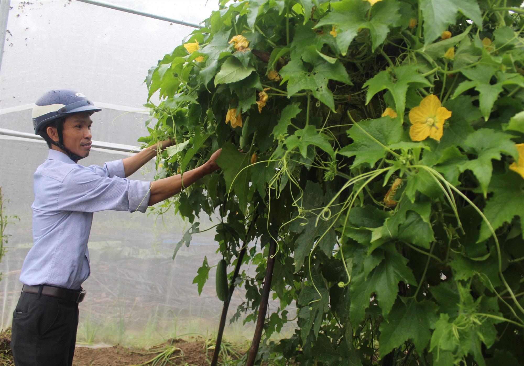 Mô hình sản xuất rau an toàn ở làng Bích An. Ảnh: VĂN PHIN