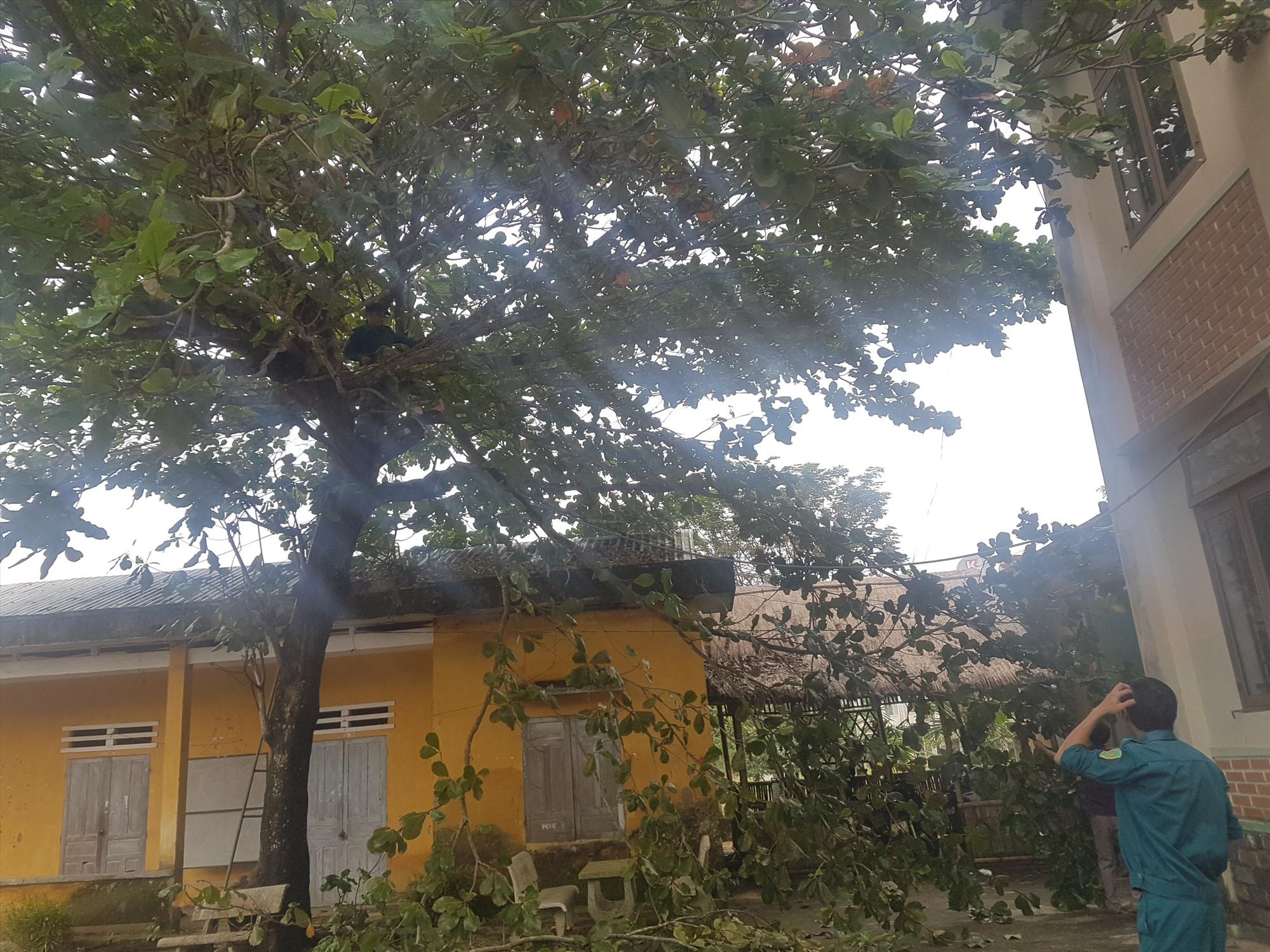 Cây cối được cắt tỉa trước khi bão đổ bộ. Ảnh: D.L