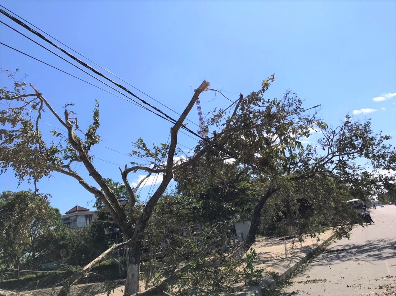 Bão số 9 làm cây cối ngã đổ nhiều nơi gây đứt cáp quang nhiều mạng viễn thông. Ảnh: VINH ANH