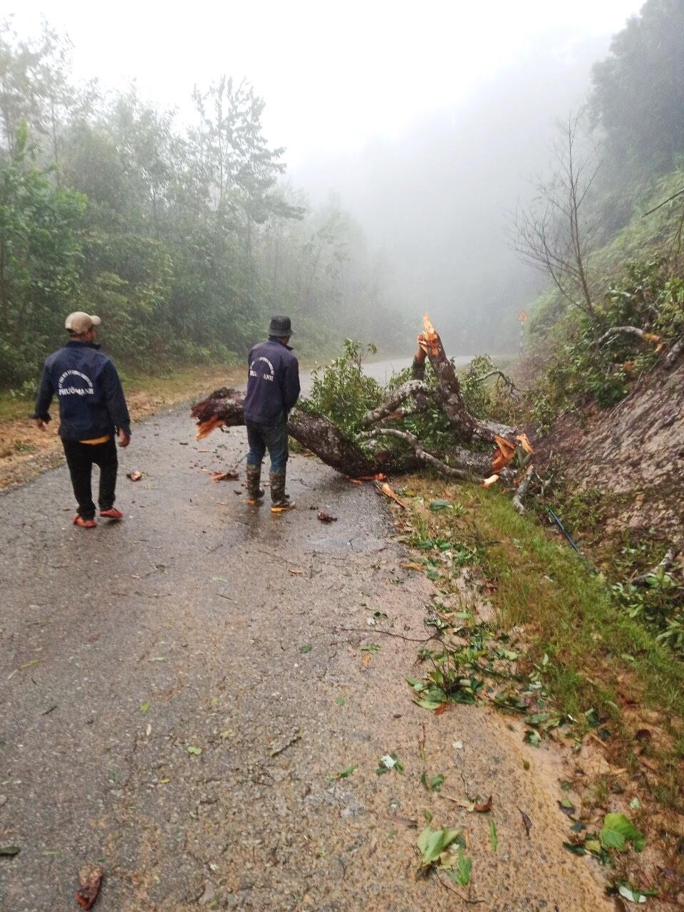 Dọn dẹp cây cối ngã đỗ để thông tuyến đường lên Tây Giang. Ảnh: CT