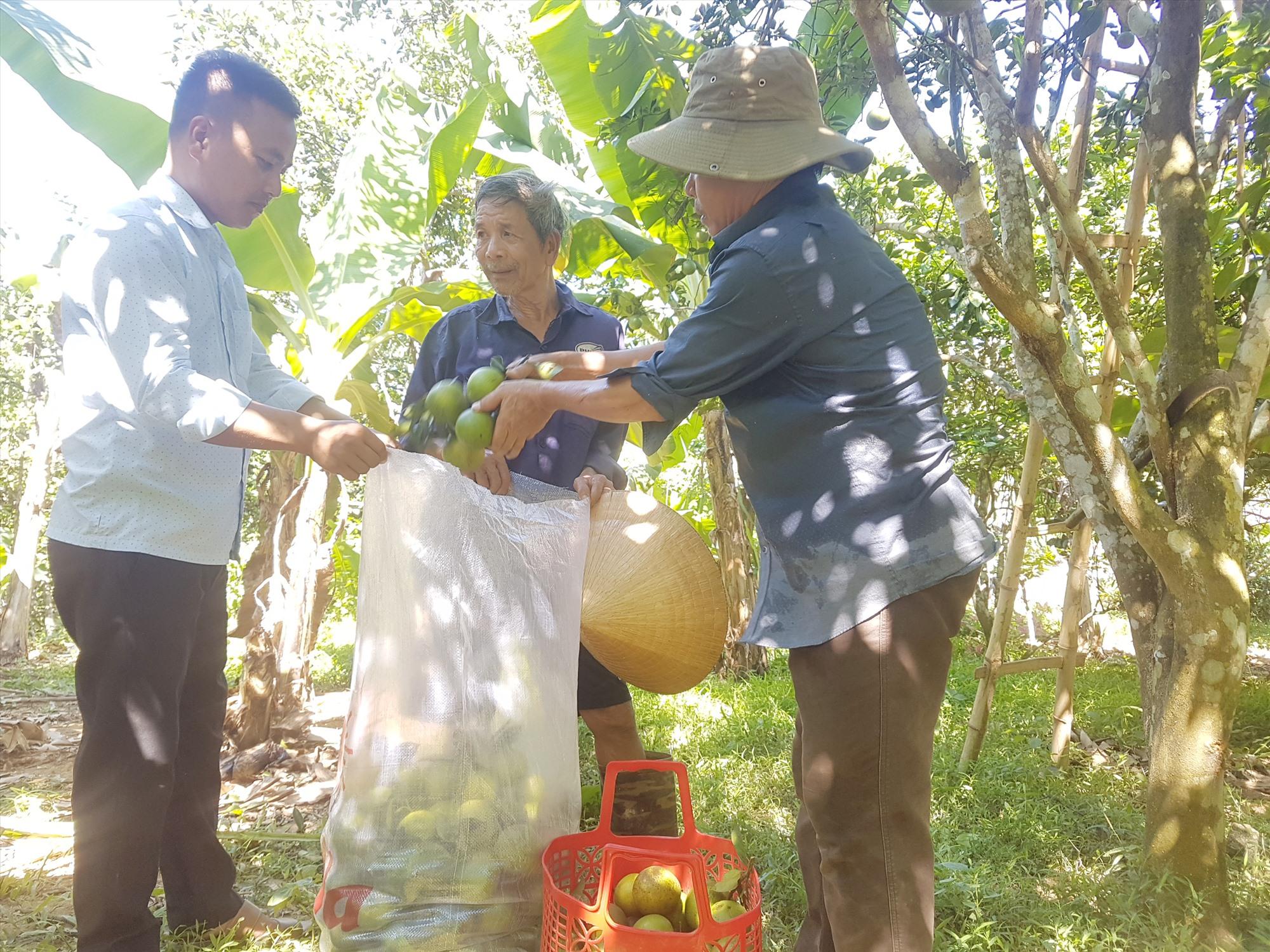 Xã Tiên Hà hỗ trợ nông dân và hợp tác xã xây dựng thương hiệu cam giấy bản địa. Ảnh: D.L
