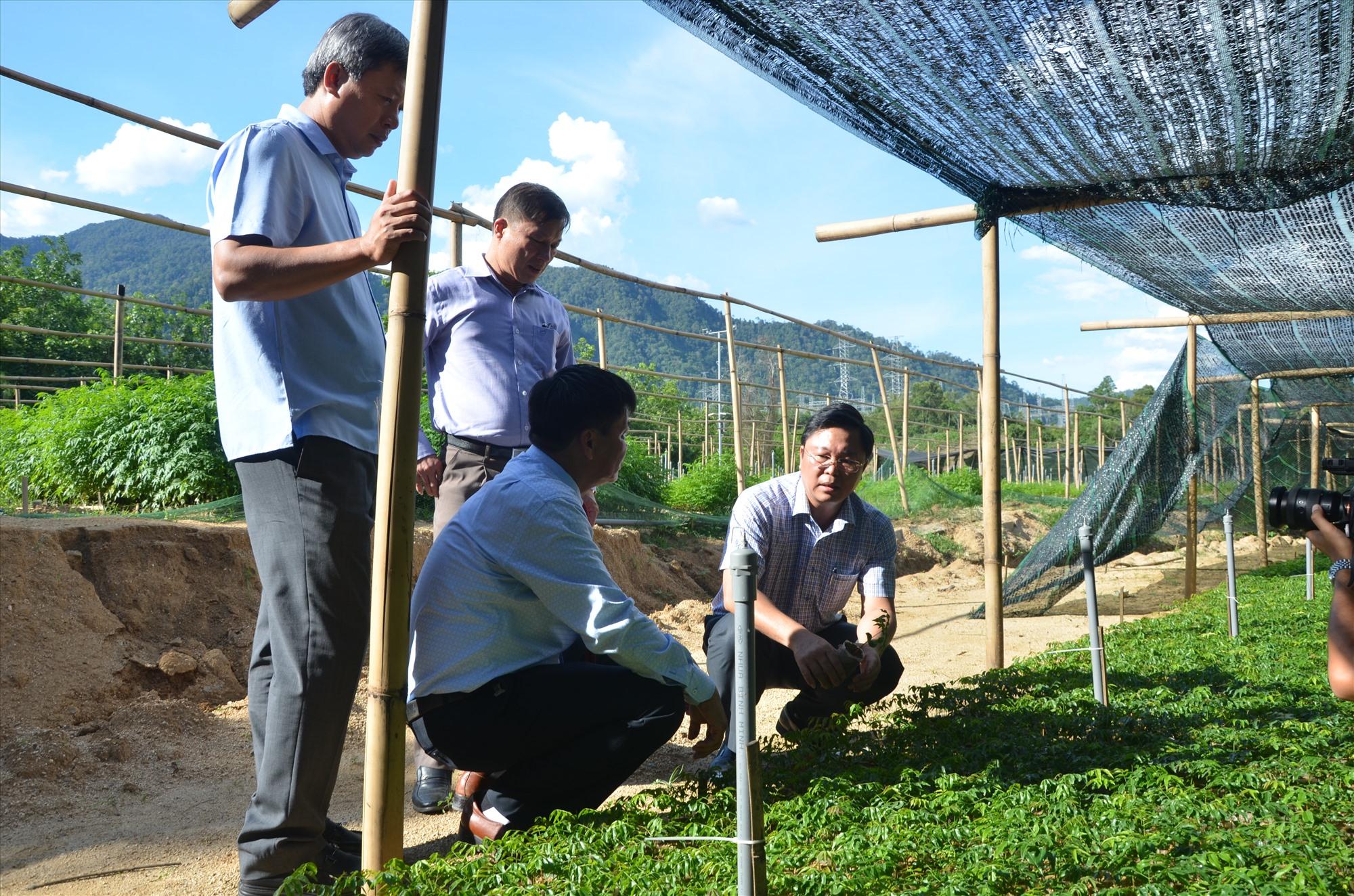 Mô hình sản xuất cây giống lâm nghiệp ở Ban Quản lý khu bảo tồn thiên nhiên sông Thanh. Ảnh: N.T
