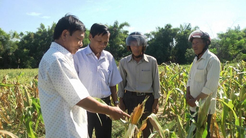 Mô hình CSA trên cây trồng cạn ở xã Đại Tân bước đầu đem lại hiệu quả rõ rệt. Ảnh: T.N