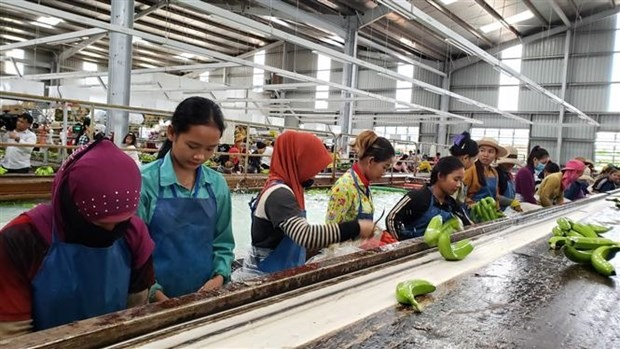 Workers at Thadi production line in Cambodia (Source: VNA)