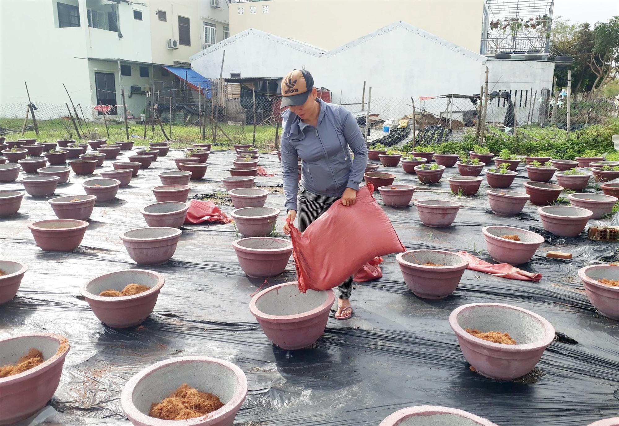 Bà Lê Thị Bé (KP. Sơn Phô 2) đang tranh thủ cho xơ dừa vào chậu để trồng hoa vạn thọ vụ mới kịp phục vụ tết.
