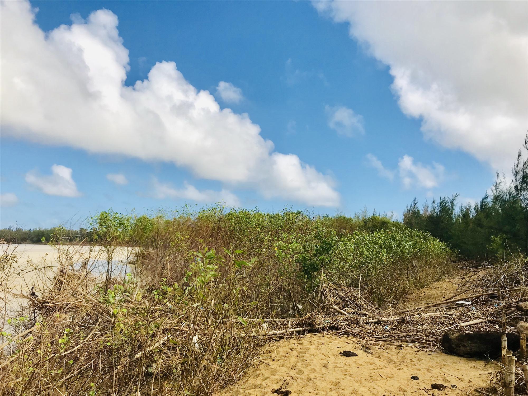 Kè ba lớp sinh thái giúp giữ đất tại xã Cẩm Kim. Ảnh: Q.T
