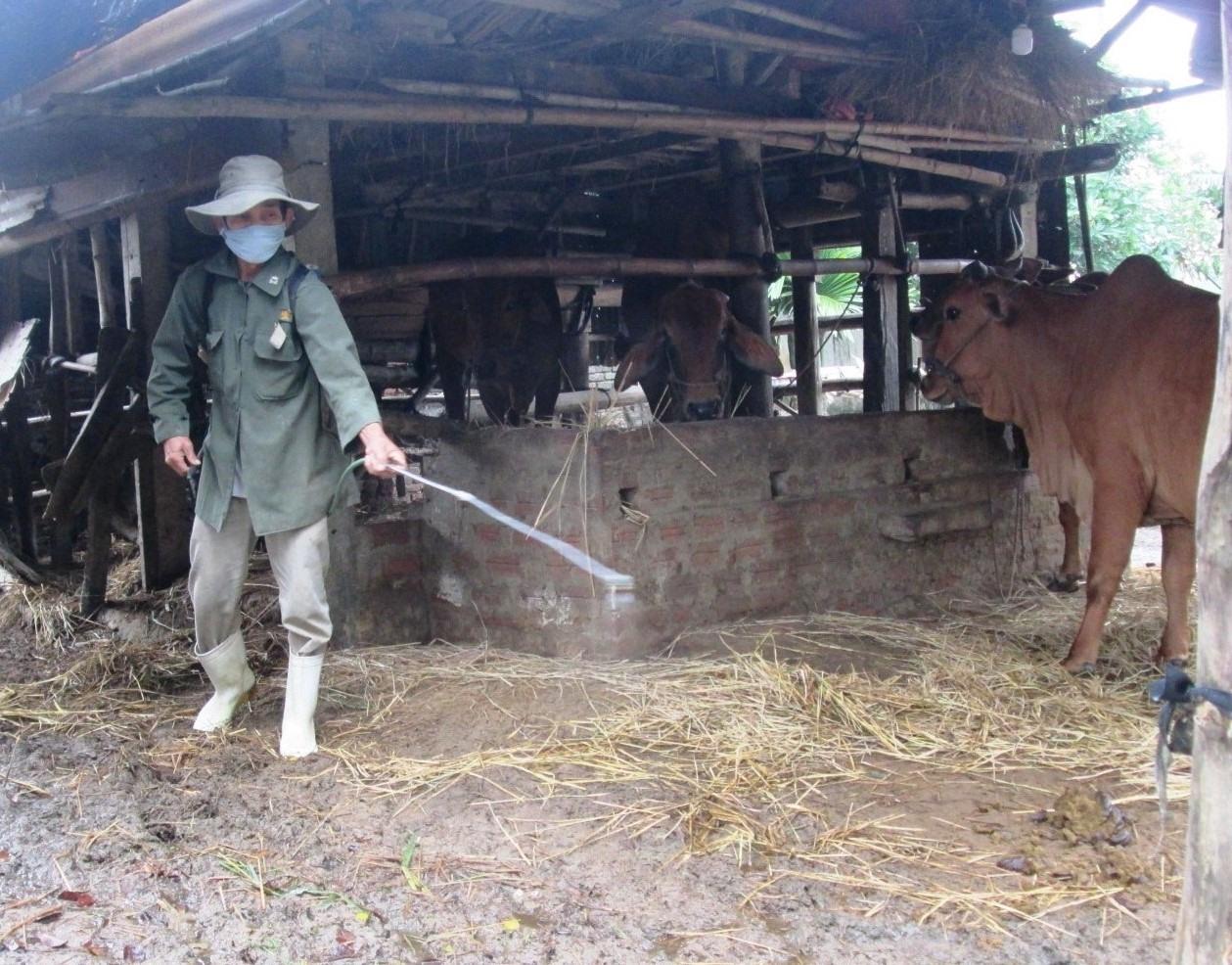 Thường xuyên phun hóa chất tiêu độc khử trùng chuồng trại để hạn chế nguy cơ dịch bệnh xuất hiện.  Ảnh: VĂN SỰ