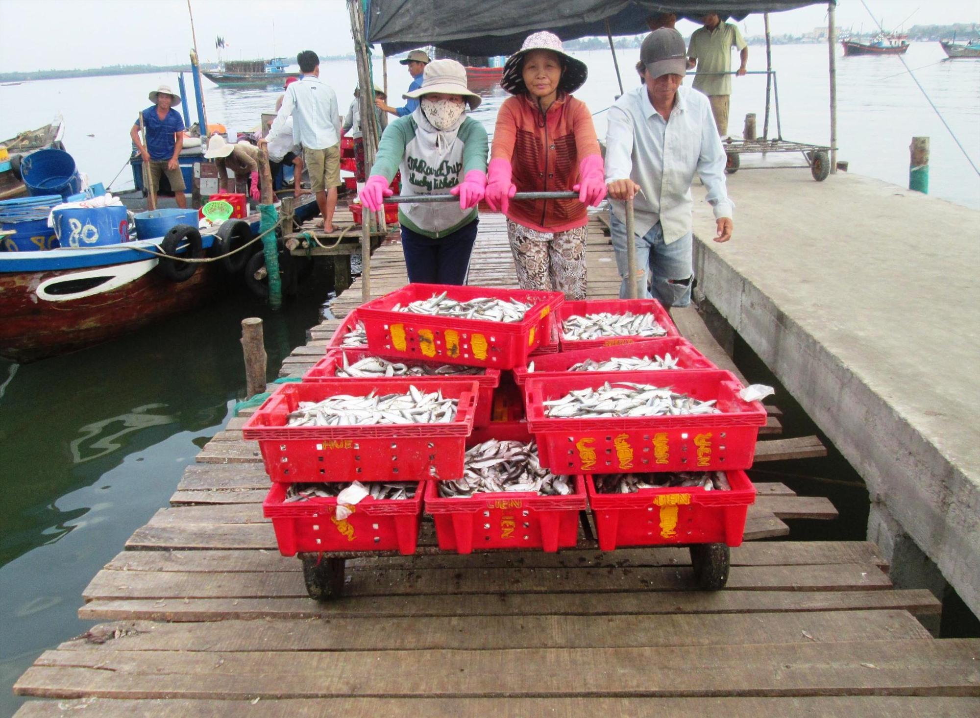 Do chưa có nhiều cơ sở chế biến thủy sản nên ngư dân thường bị tư thương ép giá. Ảnh: VĂN SỰ