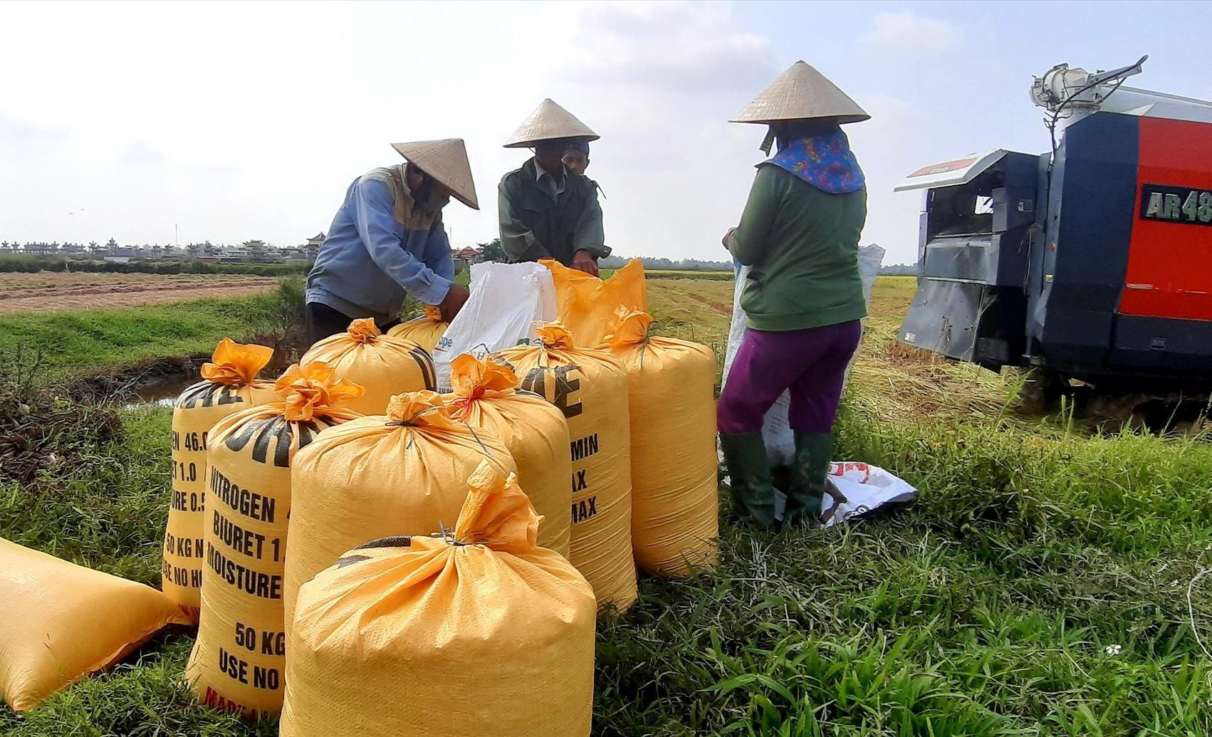 Năm 2020, hầu hết địa phương trên cả nước đều được mùa lúa. Ảnh: VĂN SỰ