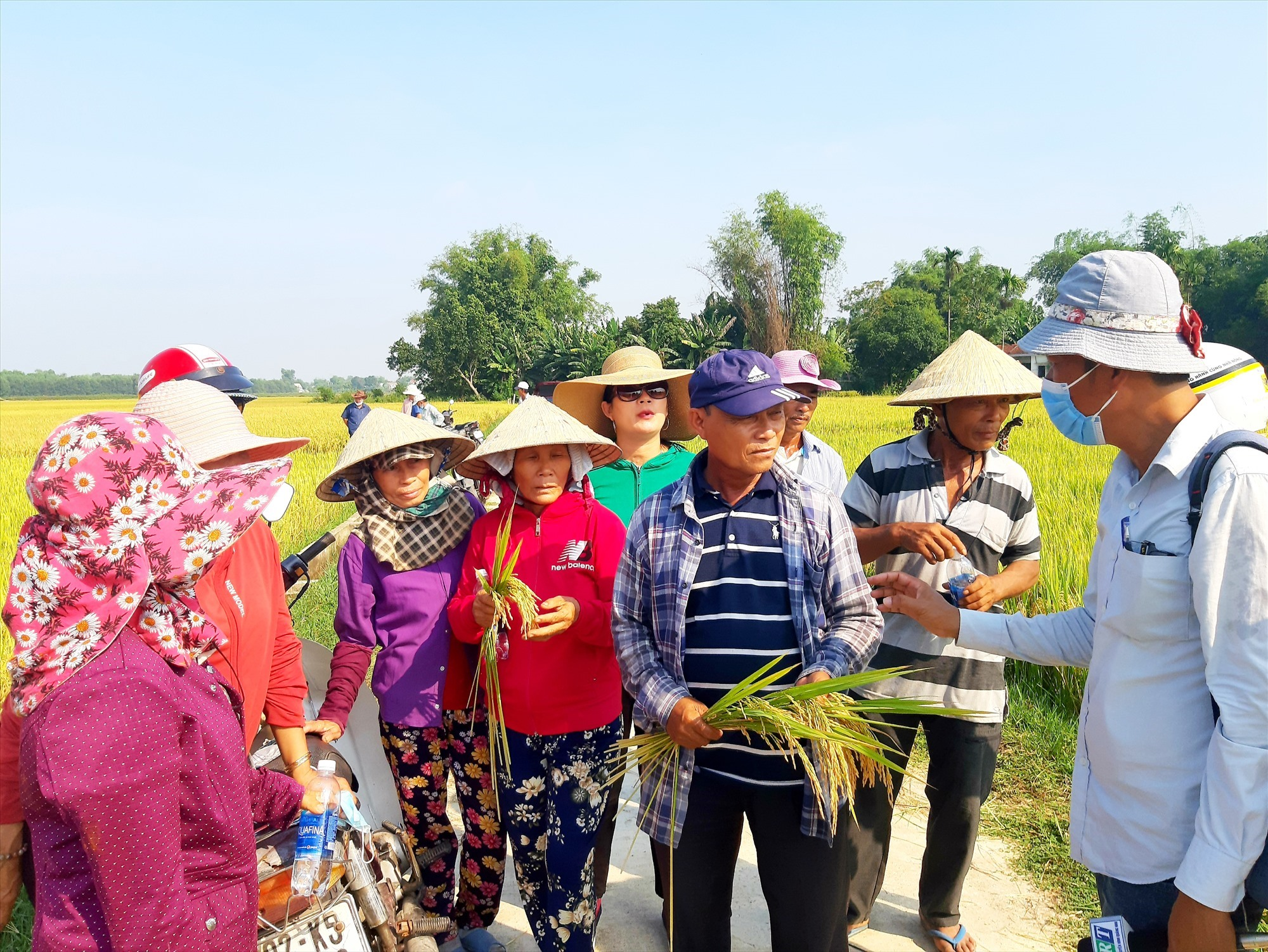 CSA for rice production in Que Phu commune, Que Son district