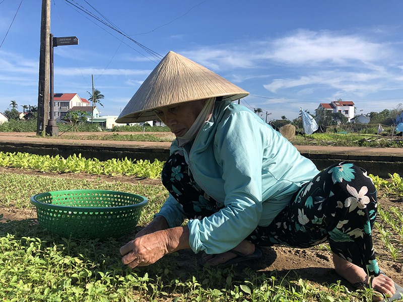 Tra Que villagers are busy preparing for the Tet crop