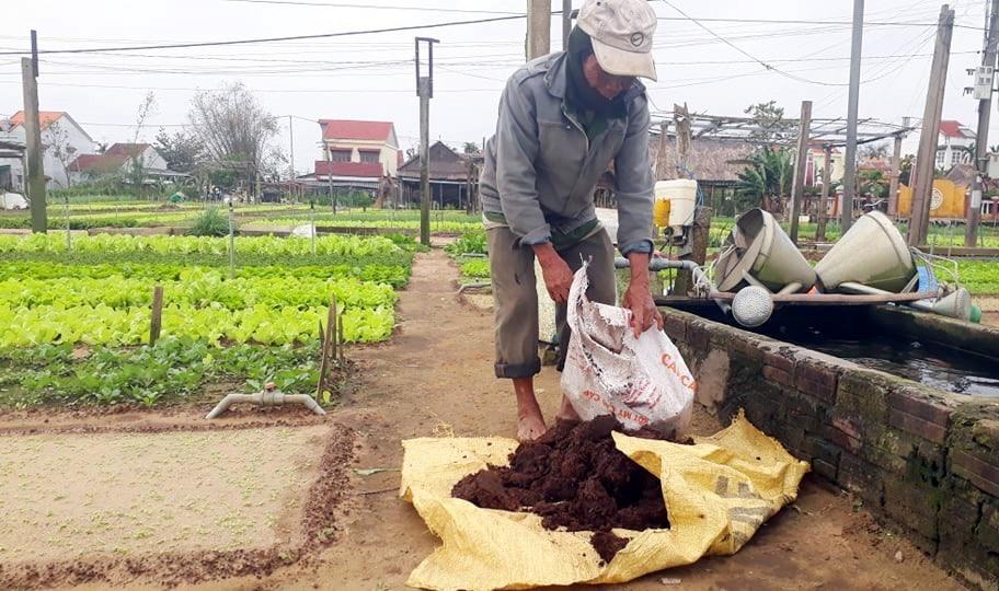 Ông Nguyễn Lên đang chuẩn bị phân bón rau vụ tết tại thôn Trà Quế.