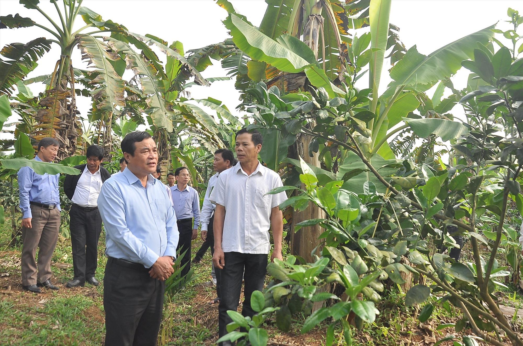 Bí thư Tỉnh ủy Phan Việt Cường kiểm tra thực tế mô hình làm kinh tế vườn tại xã Tiên Hà. Ảnh: VINH ANH