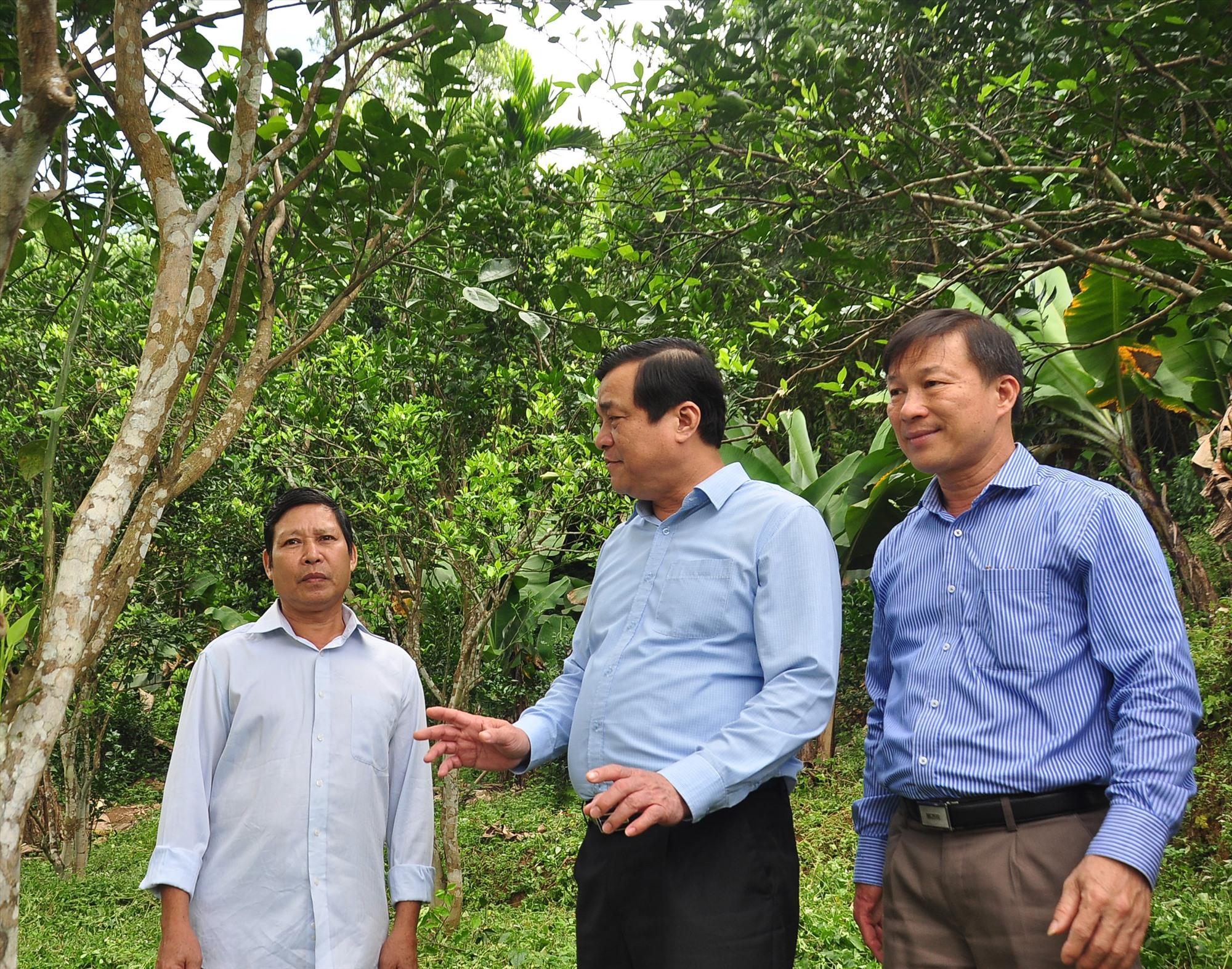 Bí thư Tỉnh ủy Phan Việt Cường thăm một số mô hình kinh tế vườn ở xã Tiên Hà. Ảnh: VINH ANH