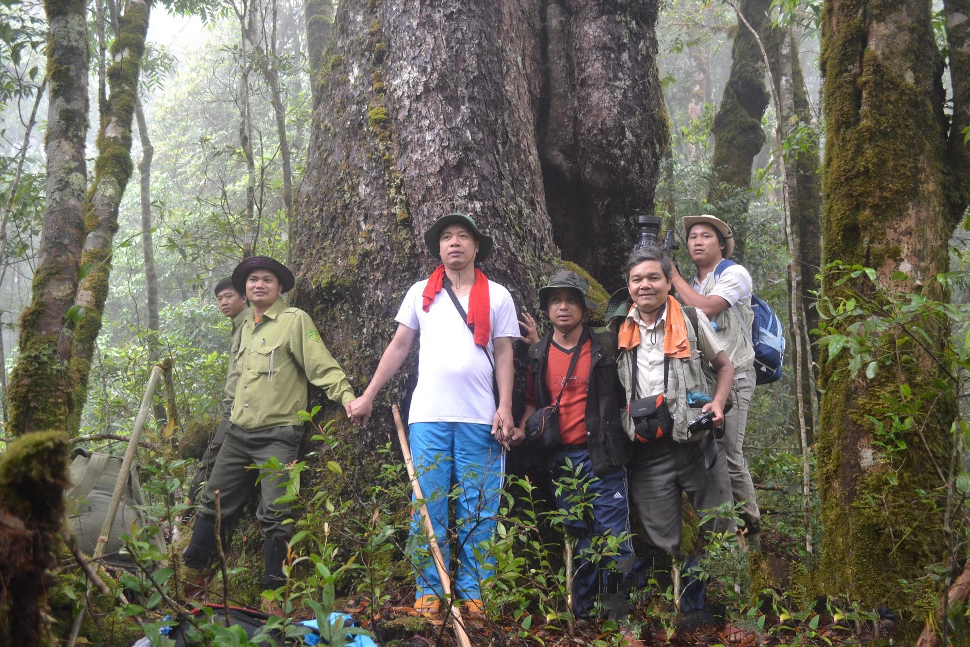 Rừng cây cổ thụ trên đỉnh Ngọc Linh. Ảnh: M.H