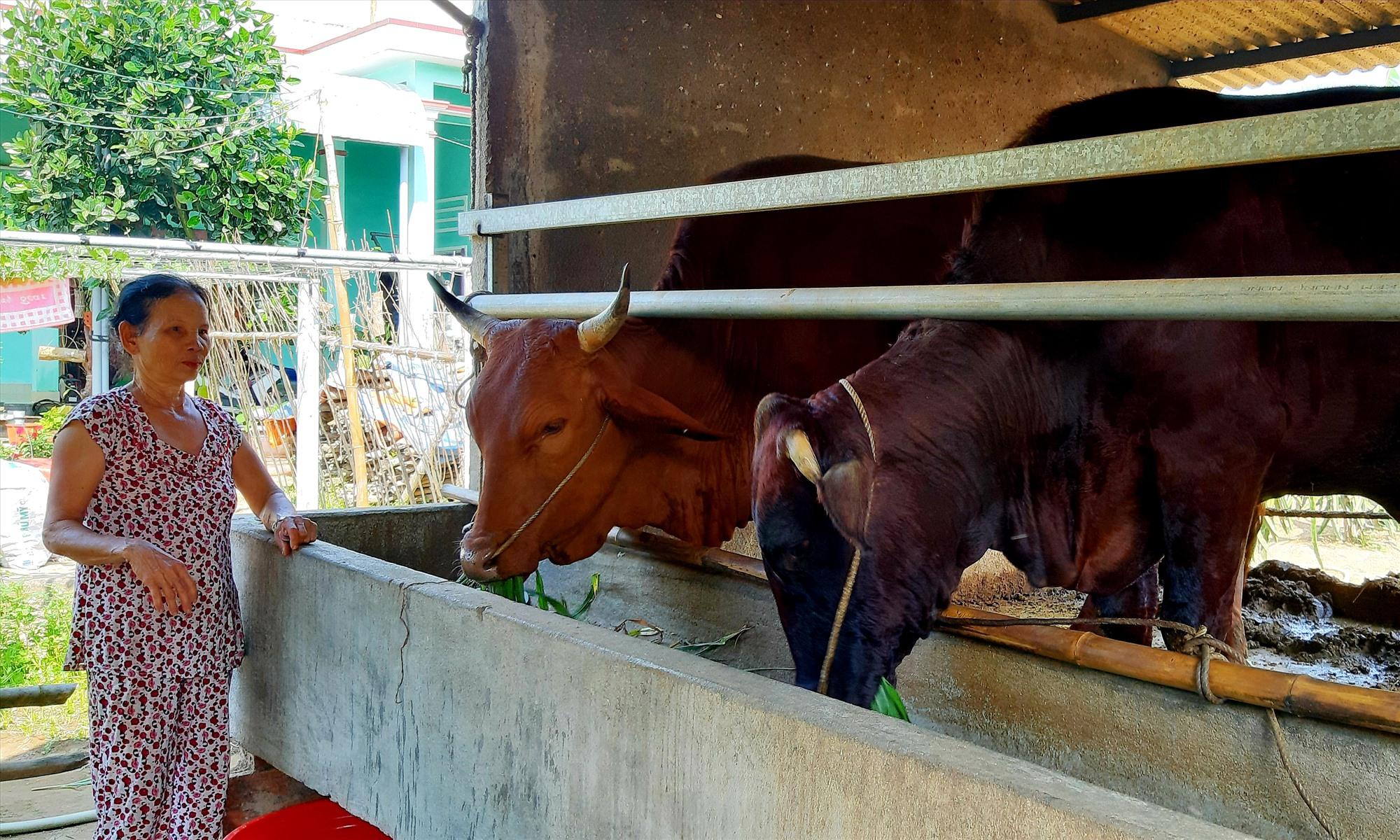 Trước tình trạng dịch LMLM lây lan mạnh, nhiều hộ chăn nuôi trên địa bàn tỉnh nhốt gia súc tại chuồng để ngăn ngừa vi rút gây bệnh xâm nhiễm.