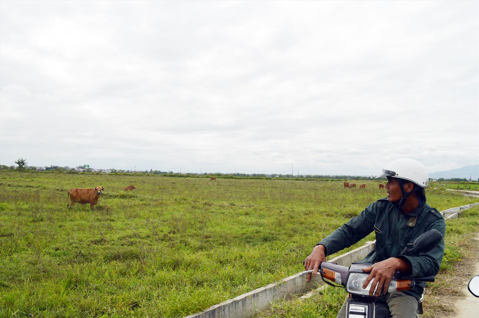 Nhiều diện tích ruộng của Điện Bàn đã bị bỏ hoang. Ảnh: K.L