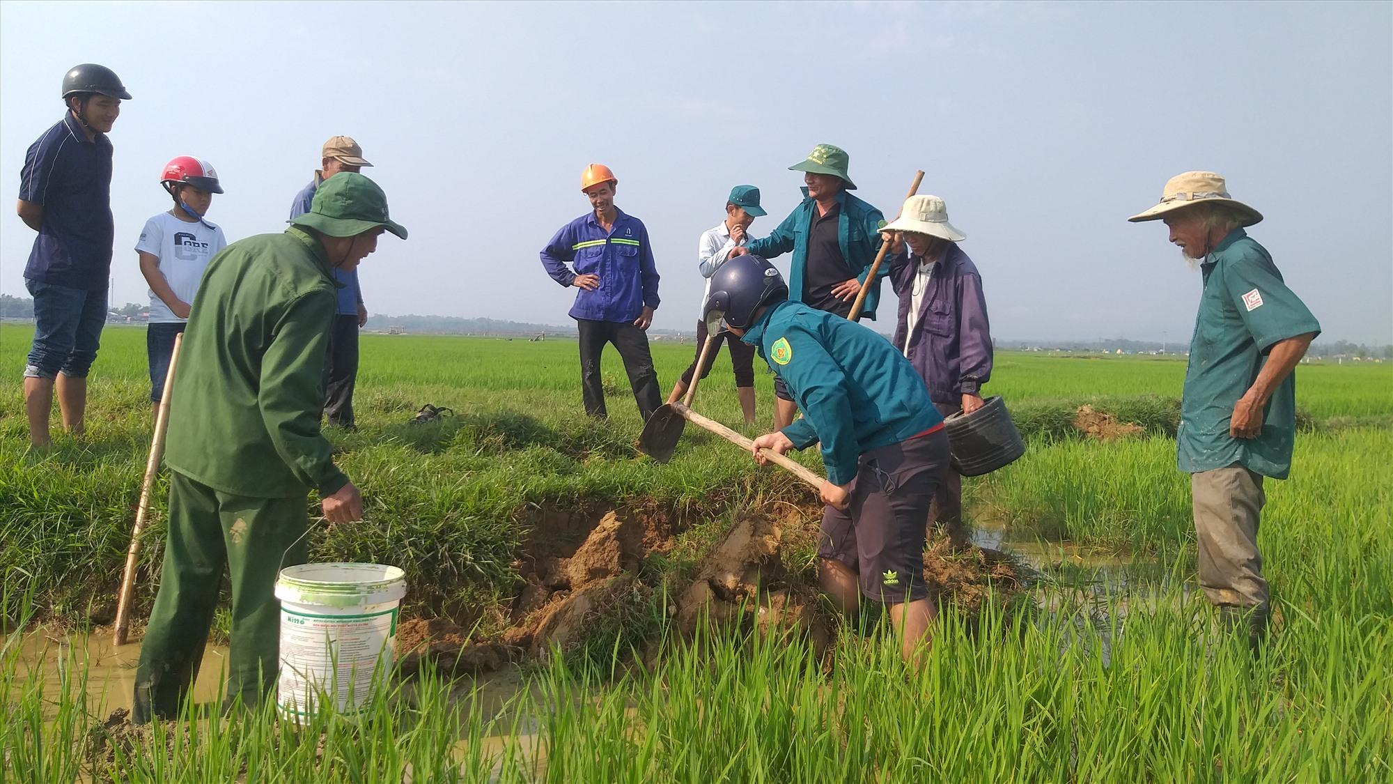 Cán bộ và nhân dân Tam Thăng cùng tham gia diệt chuột bảo vệ mùa màng.