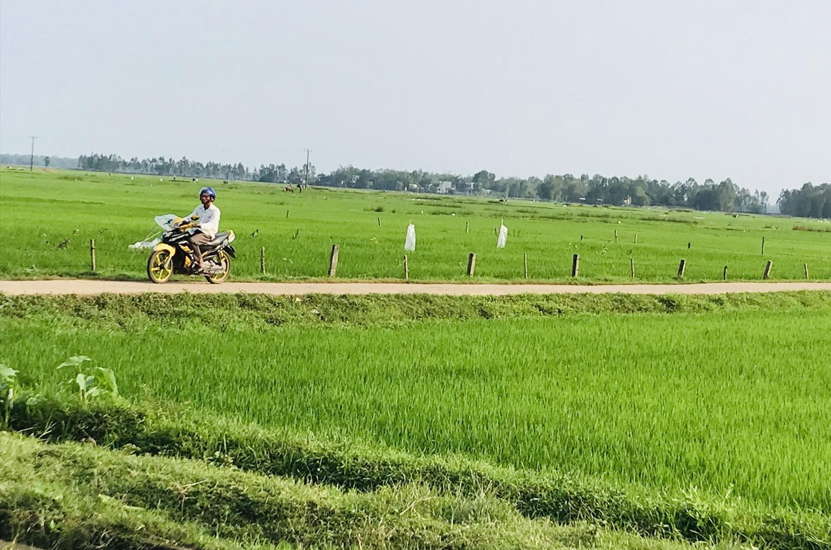 Năm 2020, Quảng Nam hỗ trợ tiền sử dụng sản phẩm dịch vụ công ích thủy lợi cho gần 86 nghìn ha đất sản xuất nông nghiệp. Ảnh: C.N