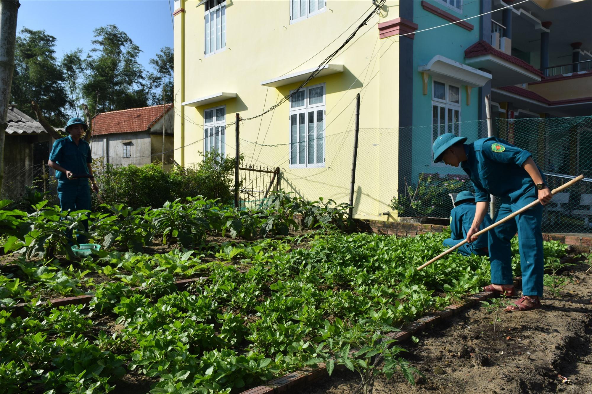 Vườn rau tăng gia của Tiểu đội dân quân thường trực xã Bình Hải. Ảnh: VĂN TOÀN