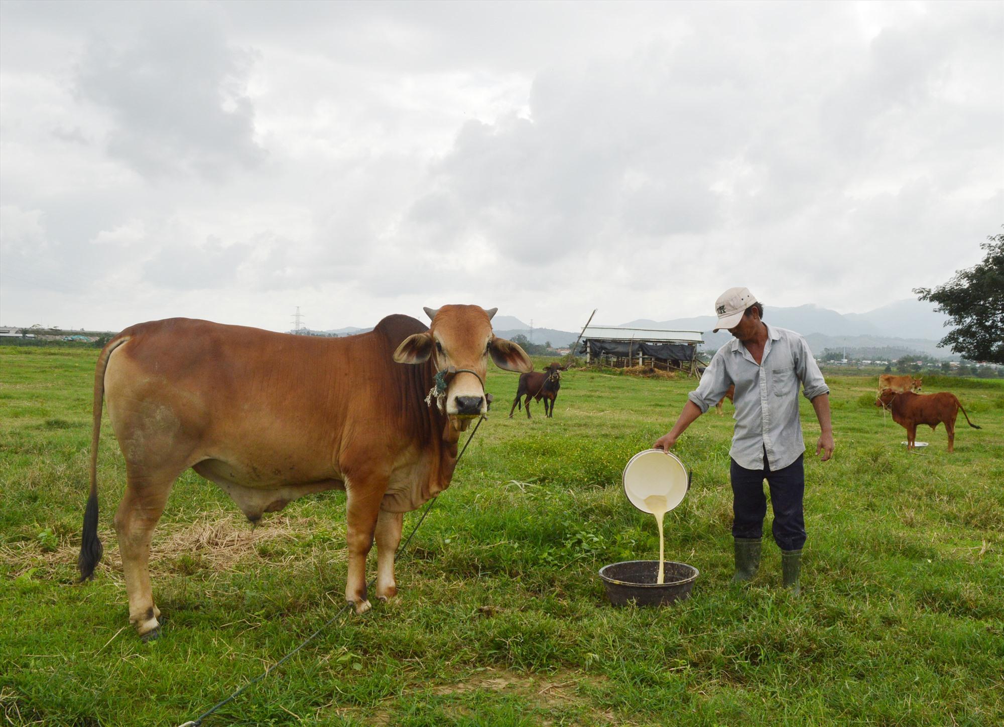 Mô hình chăn nuôi, sản xuất tập trung ở Điện Bàn được kỳ vọng mang lại hiệu quả kinh tế cao. Ảnh: G.K
