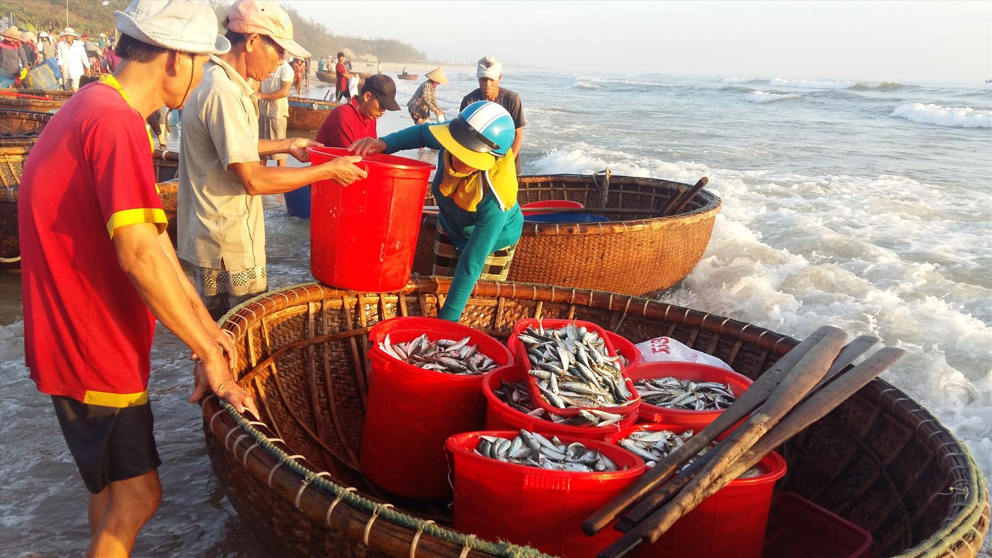 Ngư dân đưa hải sản vào bờ tiêu thụ. Ảnh: T.Đoàn