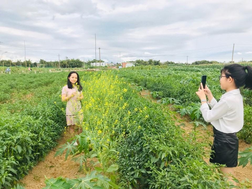 Bạn trẻ chụp ảnh ở cánh đồng Bàu Tròn (xã Đại An, Đại Lộc). Ảnh: C.N