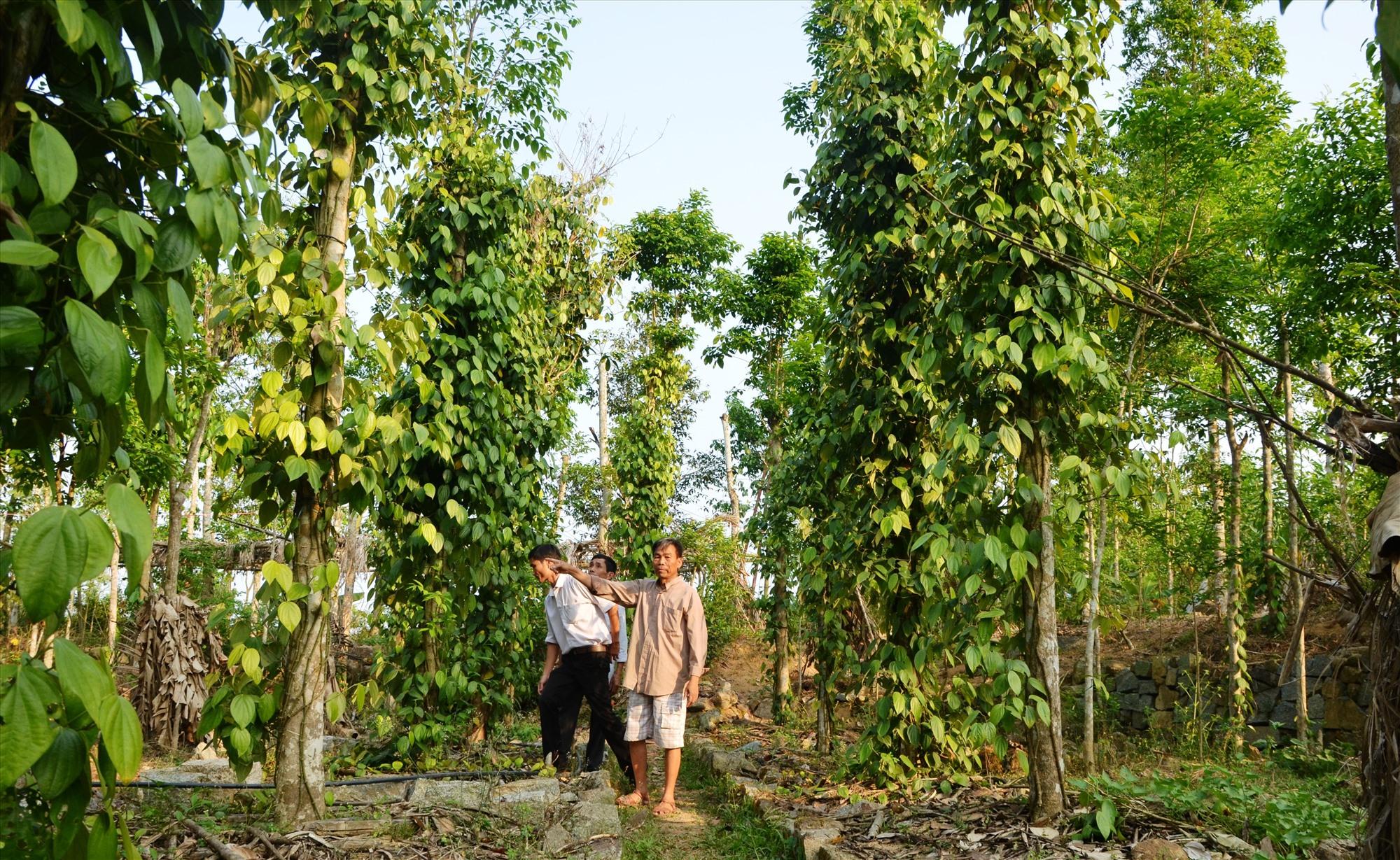 Năm 2020 Tiên Phước phấn đấu có 5 xã về đích xây dựng nông thôn mới.