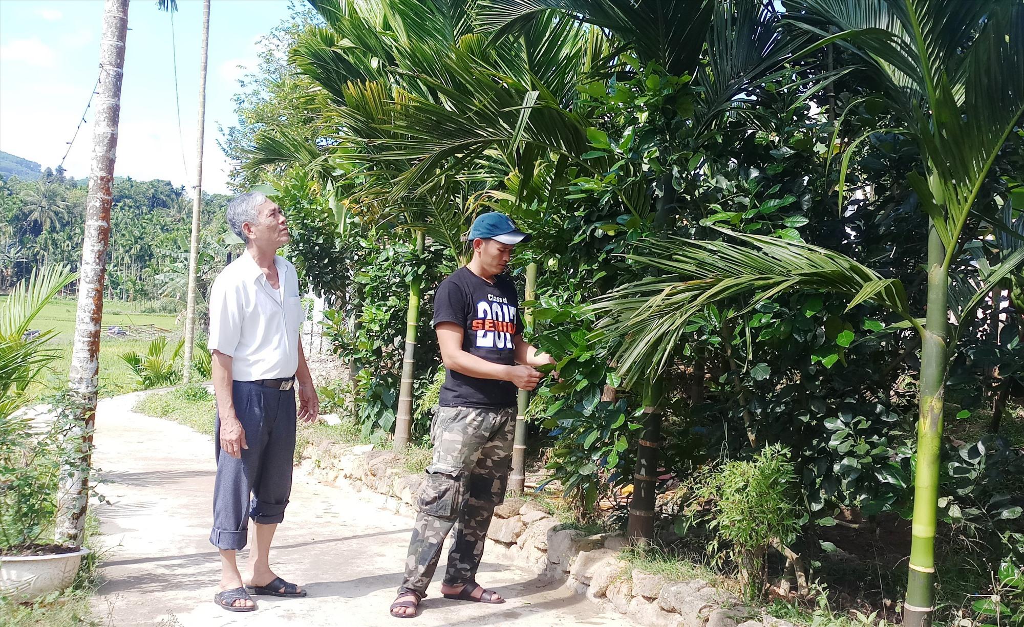 Anh Nguyễn Hữu Tuân, thôn Hữu Lâm, thị trấn Tiên Kỳ (Tiên Phước) bên vườn cây trái của gia đình.