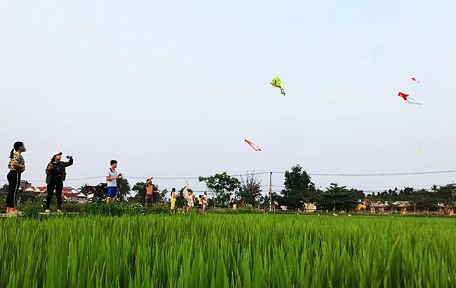 Những đồng lúa xanh no gió đầy diều.