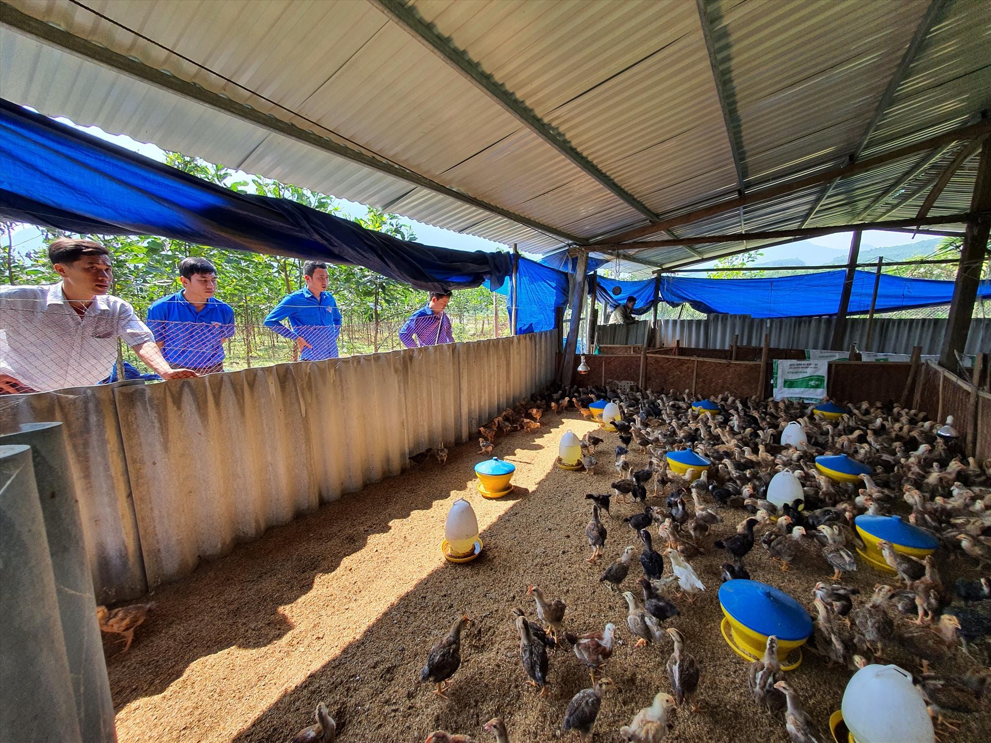 Tham quan mô hình chăn nuôi gà tại địa phương. Ảnh: T.Đ