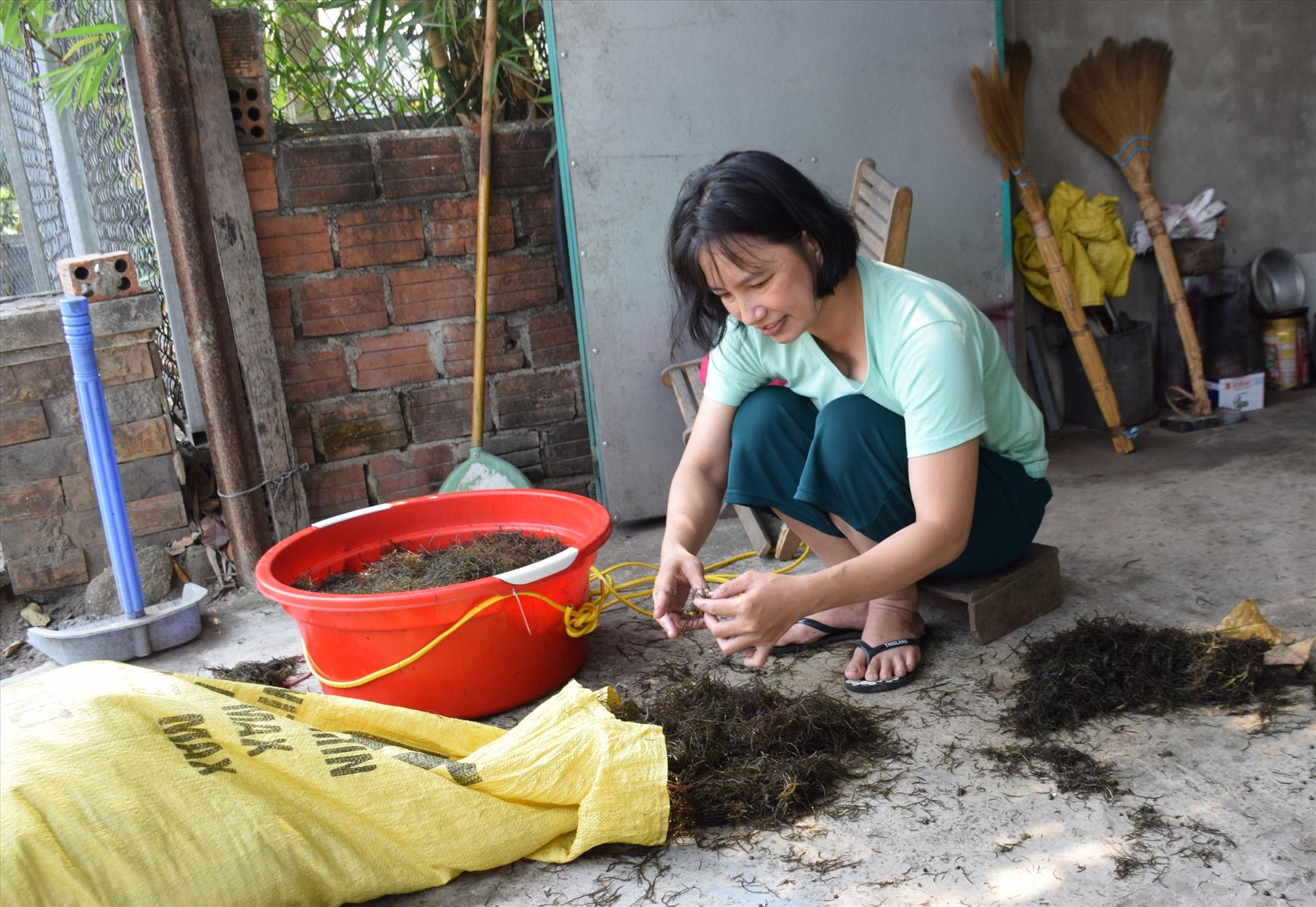 Chị Nguyệt (Lớp trẻ tư thục Lá Non, xã Tam Hiệp) phải hái rong câu bán kiếm thêm thu nhập trang trải gia đình. Ảnh: L.T