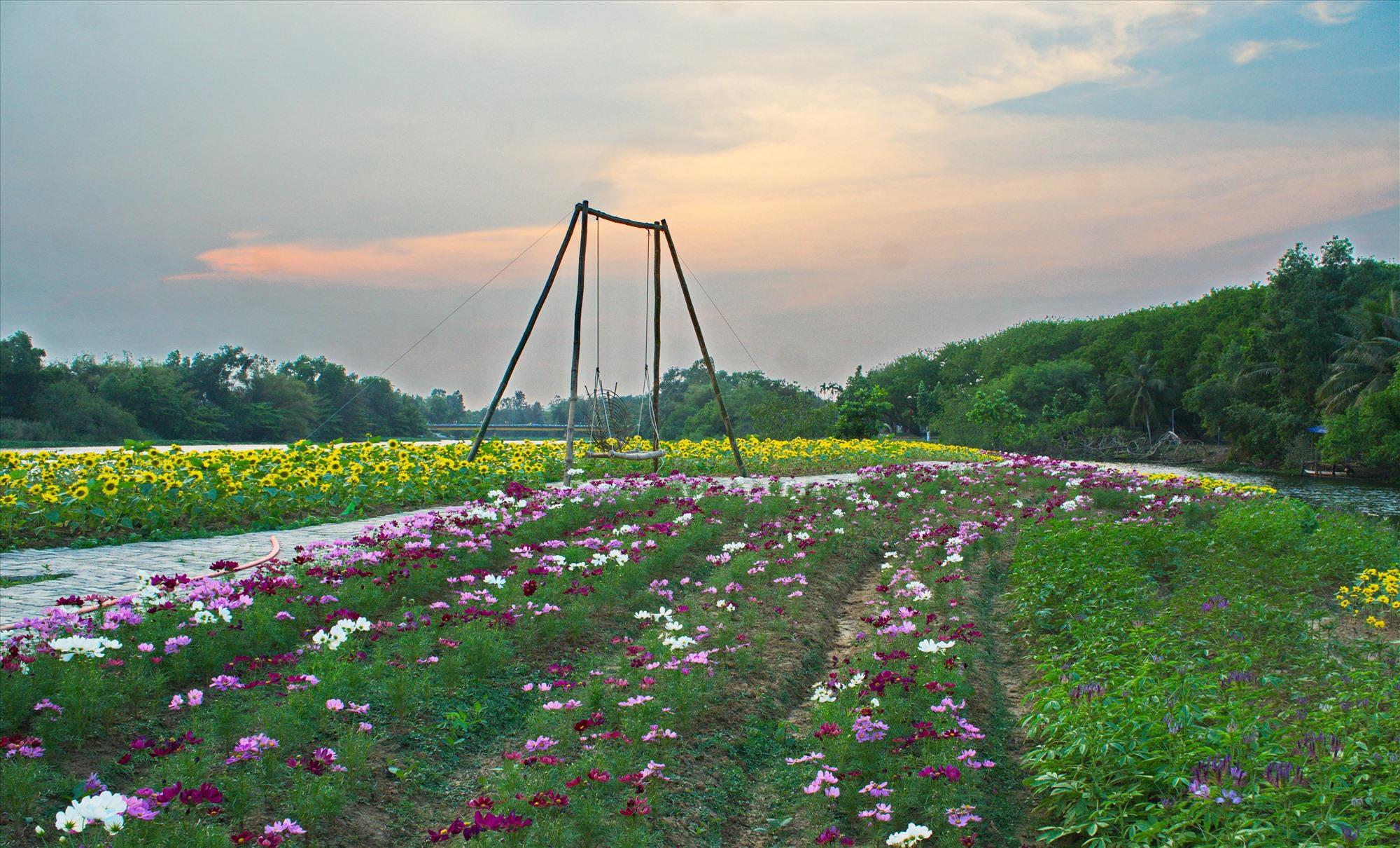 Xích đu được xây dựng giữa vườn hoa tạo điều kiện để du khách check-in. Ảnh: N.ĐIỆN NGỌC