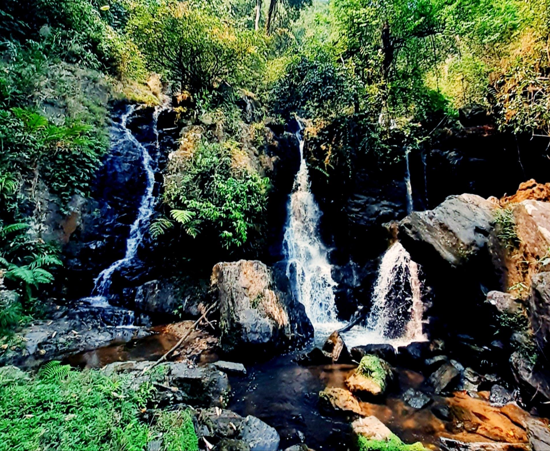 Ngoài suối nước trong mát, điểm cộng nữa ở thác R'măng là hệ thực vật phong phú, đầy quyến rũ. Ảnh: N.L