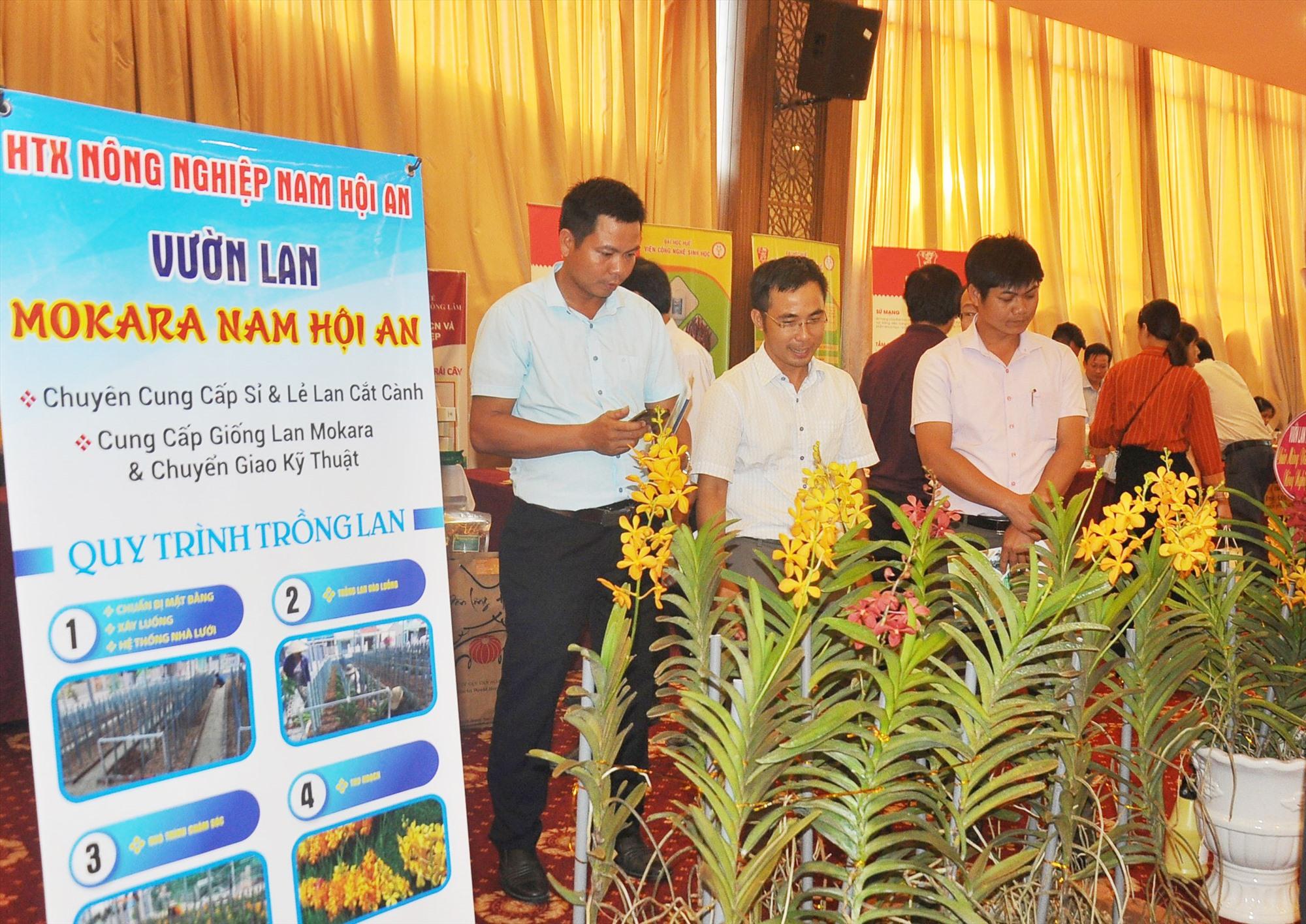 """Dự án khởi nghiệp """"Vườn lan Mokara Nam Hội An"""" của HTX Nông nghiệp Nam Hội An tham gia giới thiệu tại một sự kiện về khởi nghiệp nông nghiệp trên địa bàn tỉnh. Ảnh: Đ.N"""