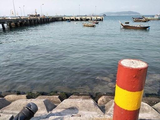 Tập đoàn san hô hồi sinh ở thôn Bãi Làng - Cù Lao Chàm.