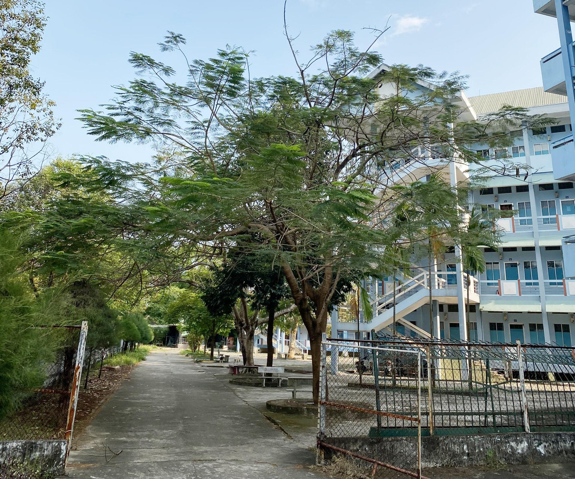 Khu ký túc xá Trường Đại học Quảng Nam. Ảnh: D.L