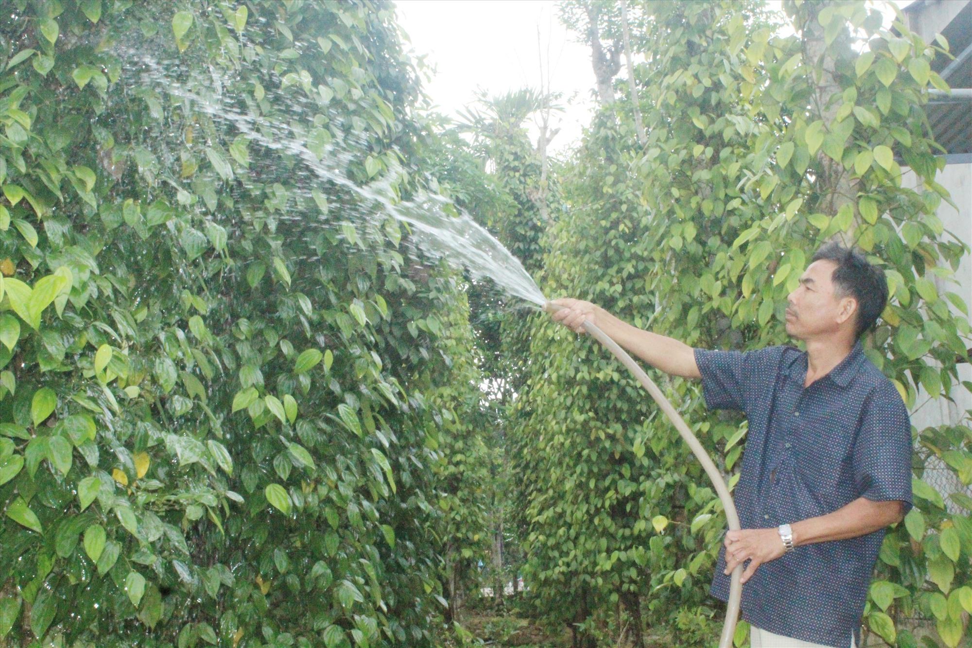 Người dân Tiên Phong tích cực chỉnh trang vườn nhà sạch đẹp, có giá trị kinh tế cao. Ảnh: D.L