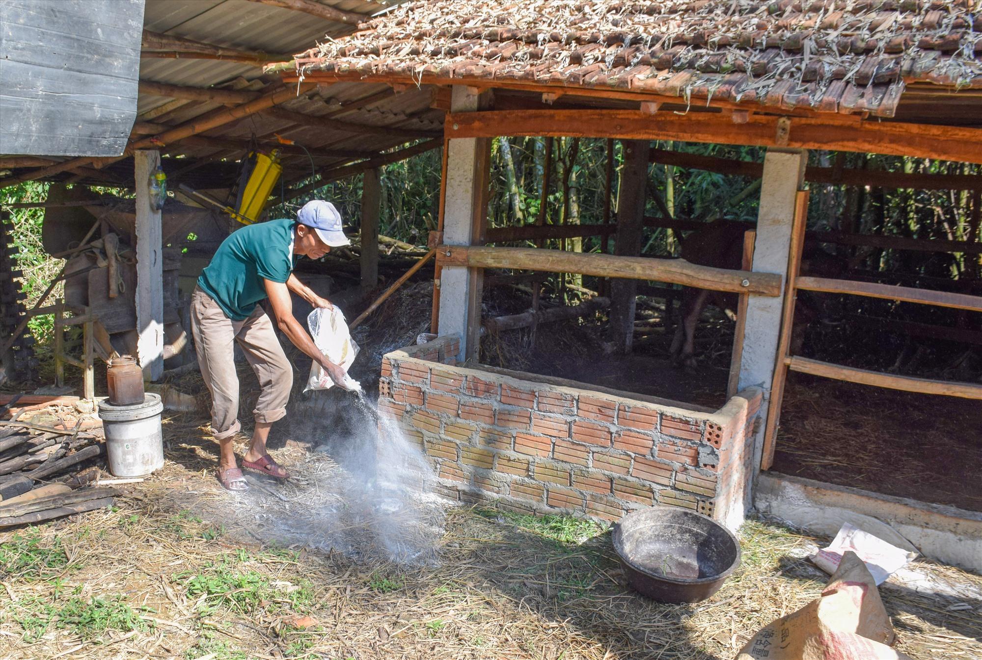 Người dân Phú Ninh rải vôi xung quanh khu vực chăn nuôi. Ảnh: ML