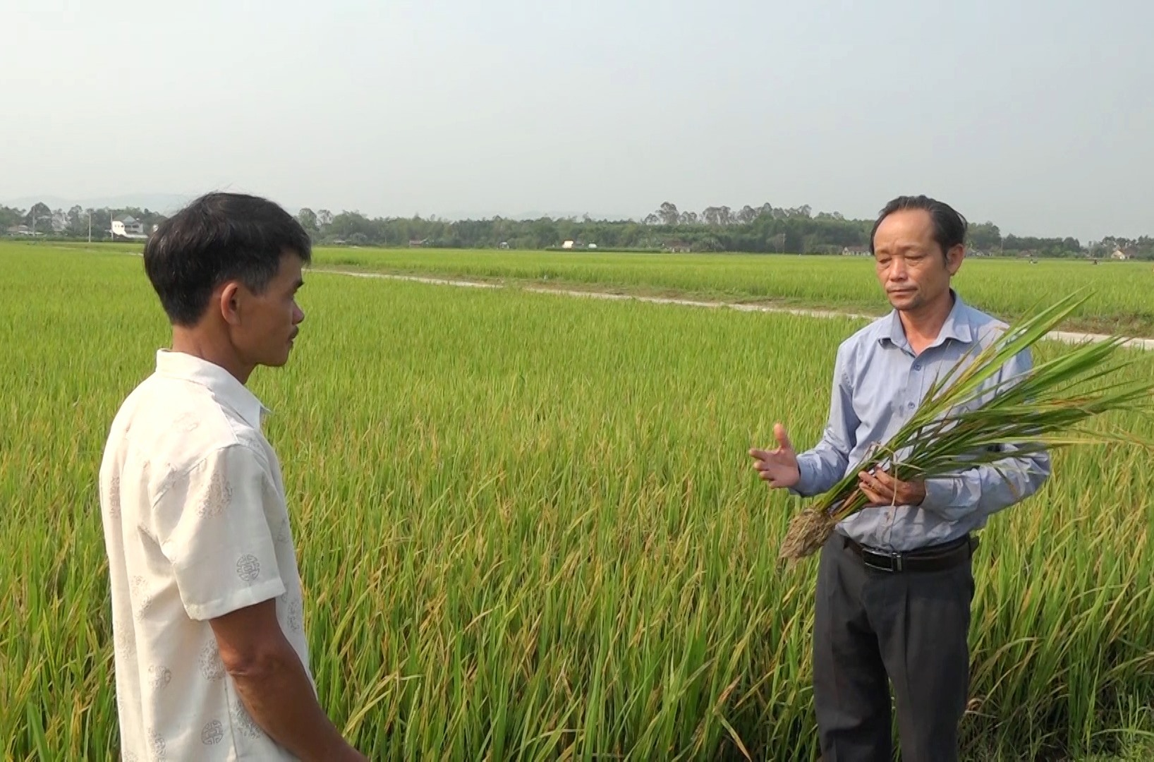 Cán bộ kỹ thuật Trung tâm Kỹ thuật Nông nghiệp huyện Thăng Bình hướng dẫn người dân nhận biết các loại sâu bệnh gây hại lúa.