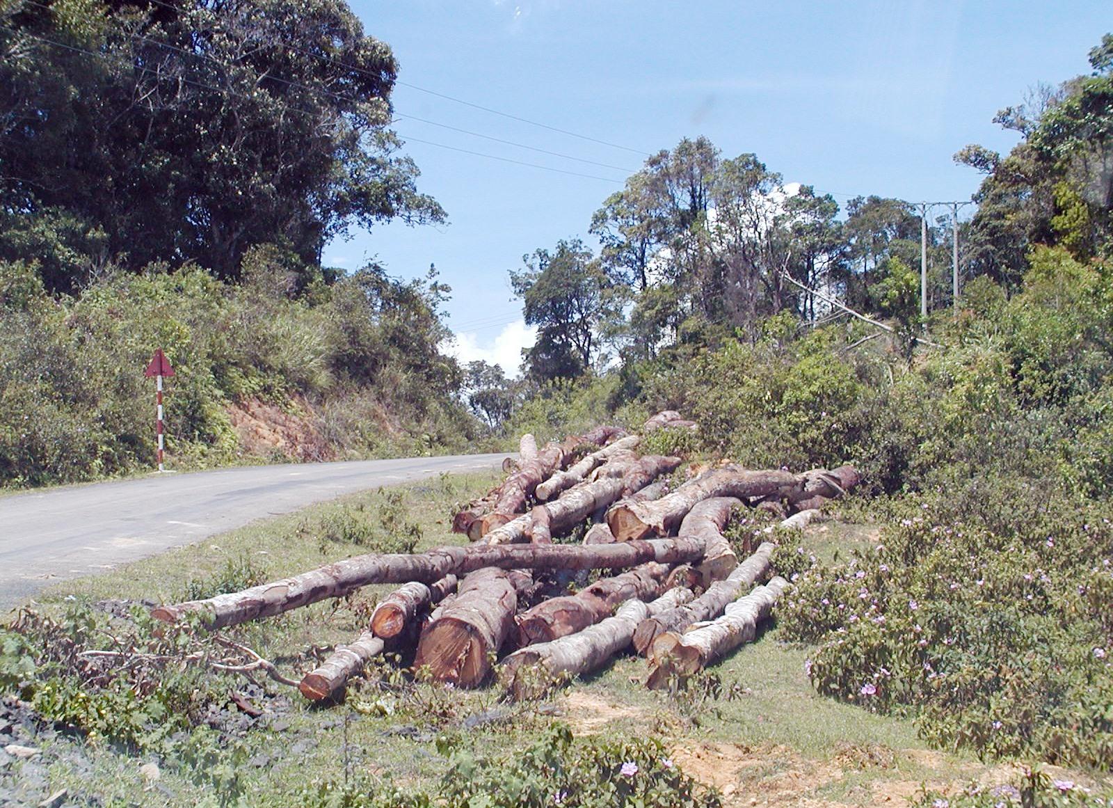 Đường trải dài đến đâu, nạn phá rừng càng mạnh và khó ngăn chặn đến đó.