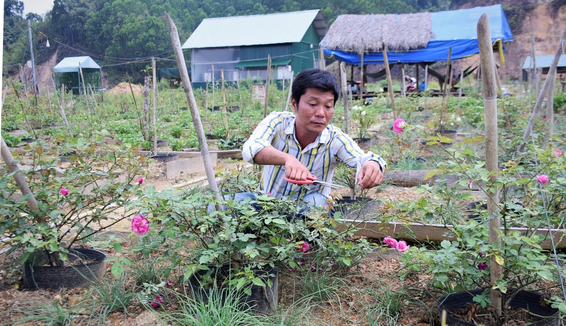 Nông trại hoa hồng ở Tây Giang