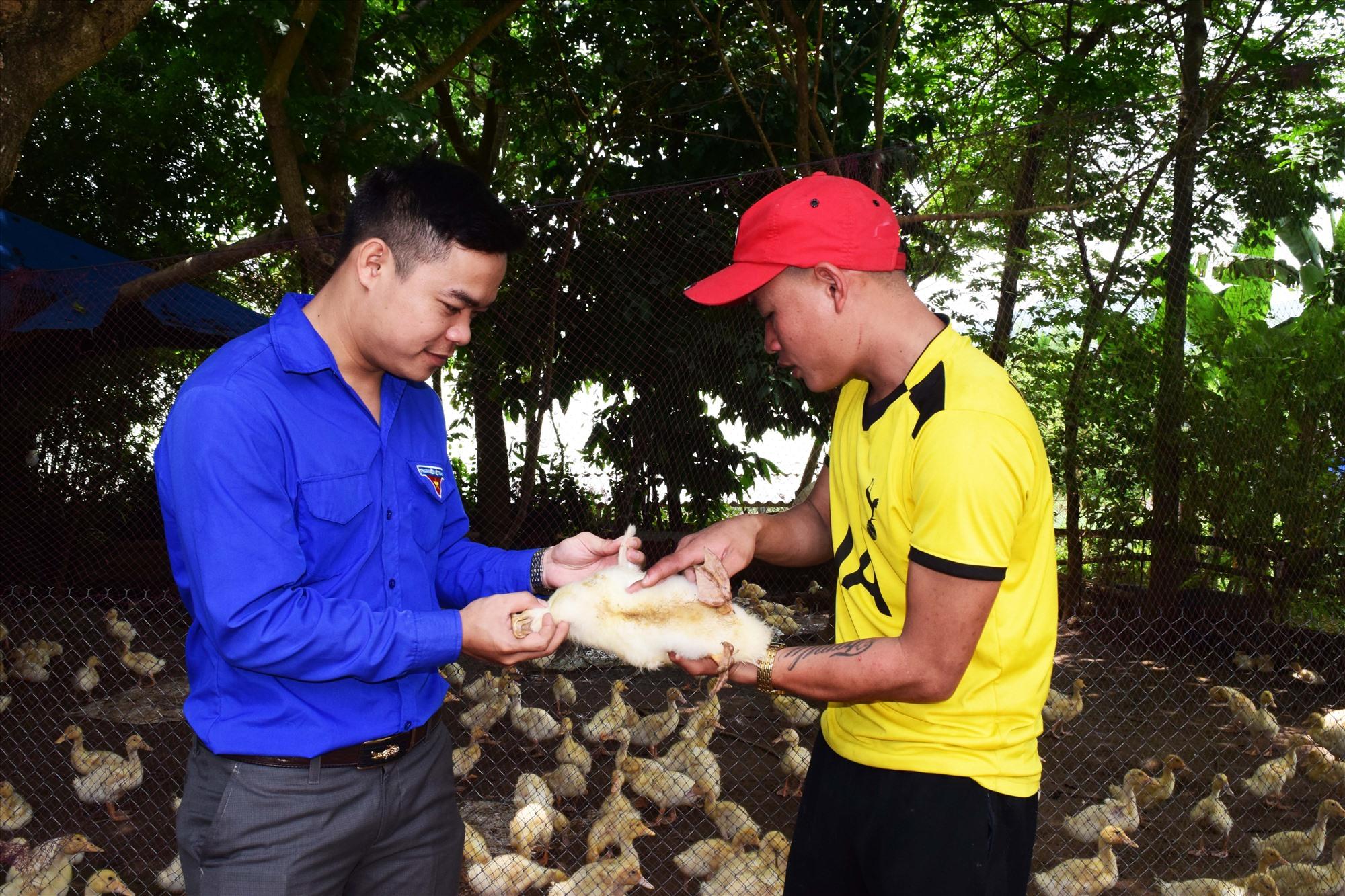 Anh Phan Văn Minh tạo cầu nối giúp đỡ thanh niên lập nghiệp tại quê nhà. Ảnh: THÁI CƯỜNG