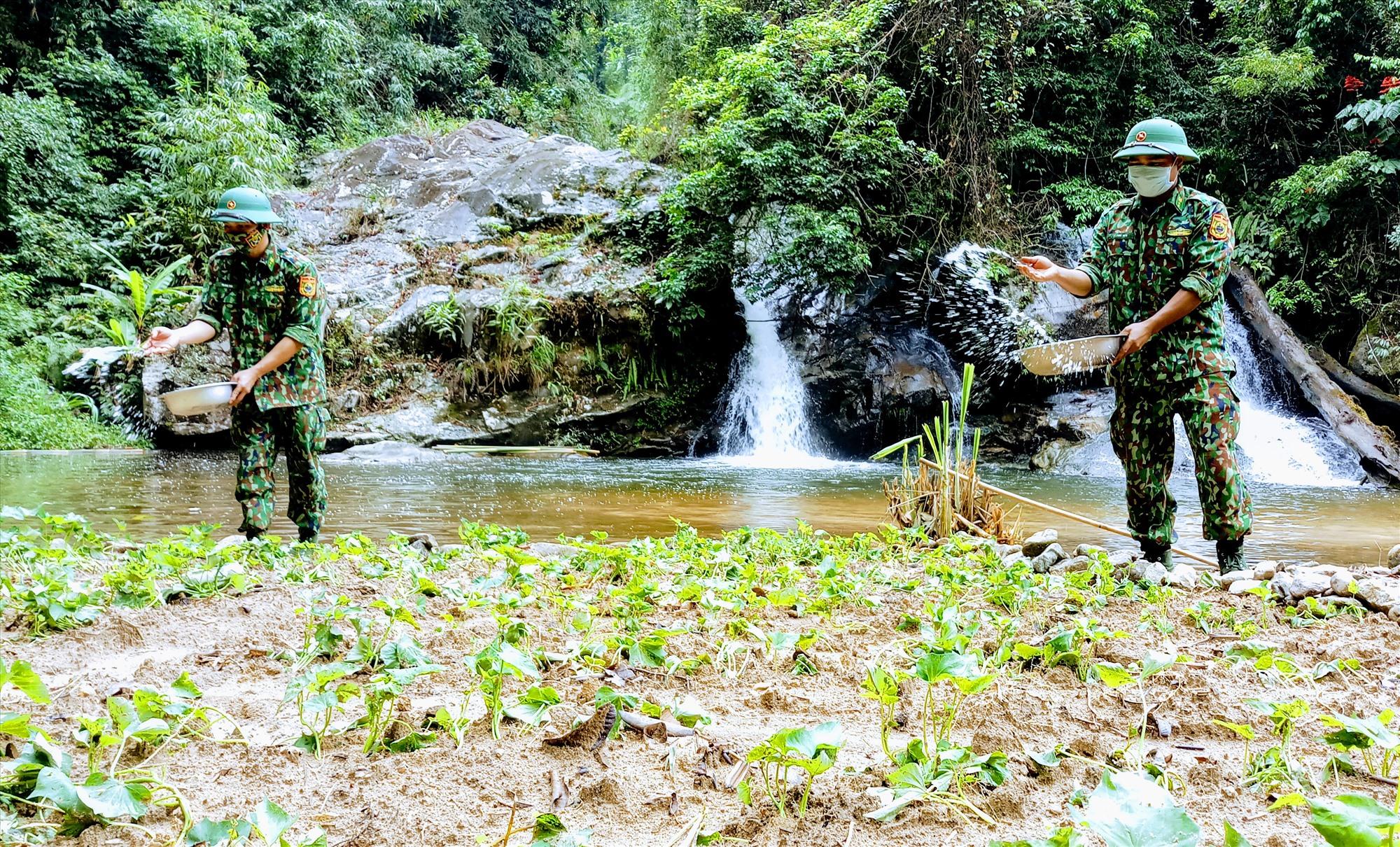 Tranh thủ sau chuyến tuần tra, các chiến sĩ tại chốt kiểm soát xã La Dêê (Nam Giang) chăm sóc vườn rau giữa rừng. Ảnh: ALĂNG NGƯỚC