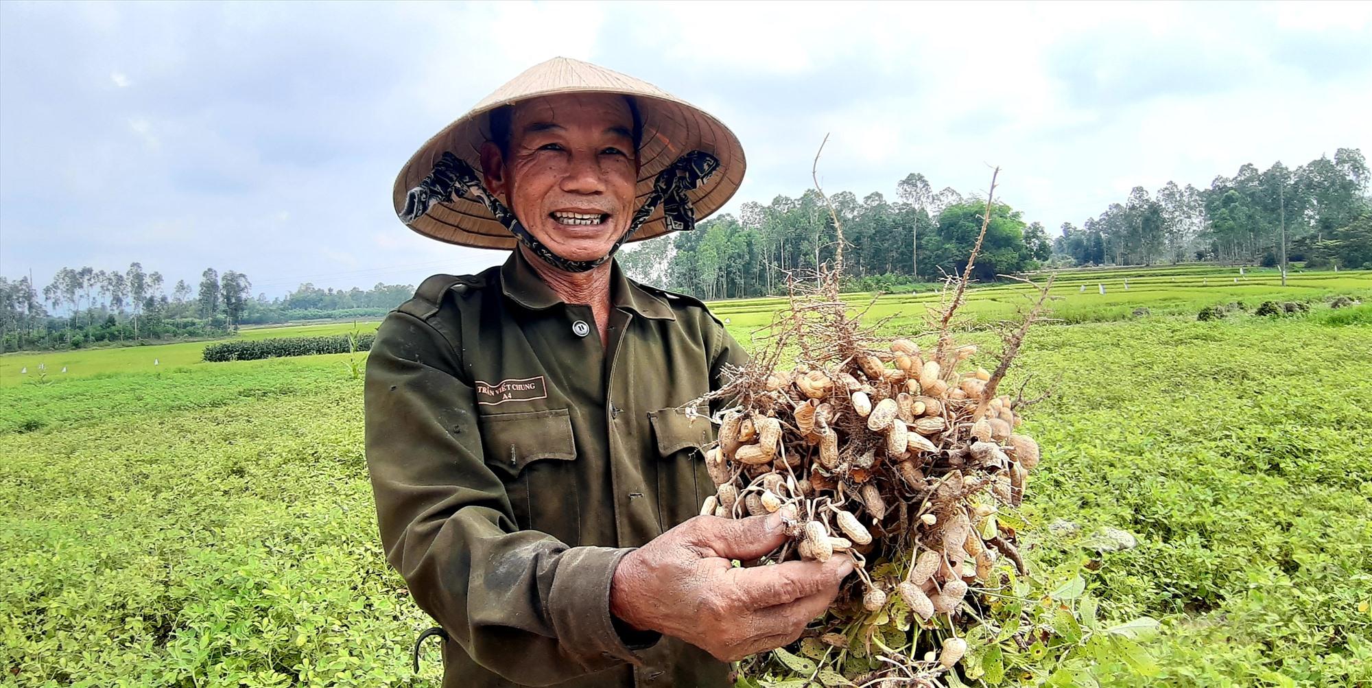 Vụ đông xuân này, nông dân nhiều địa phương của tỉnh rất phấn khởi vì đậu phụng được mùa trên diện rộng. Ảnh: T.R